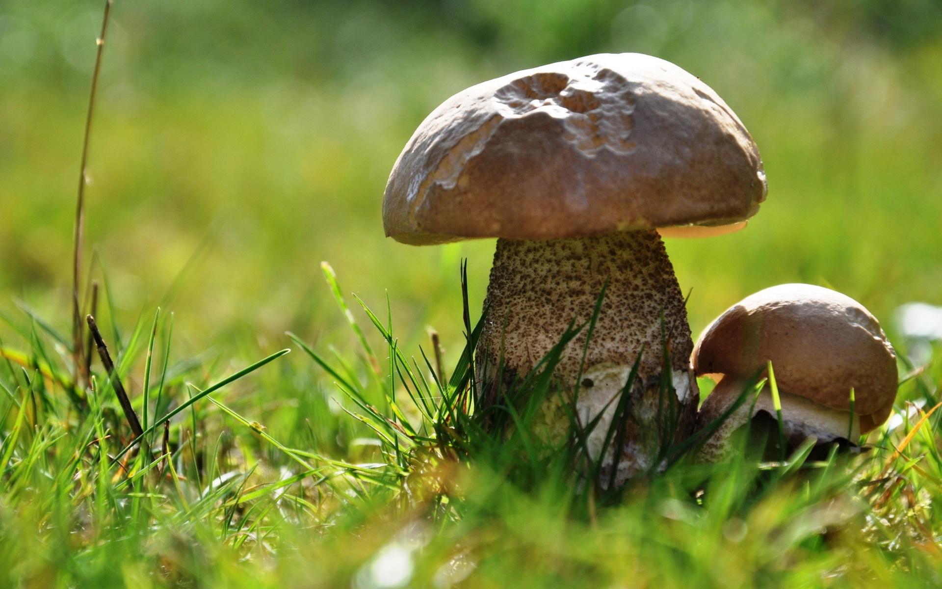 Большие картинки красивых грибов