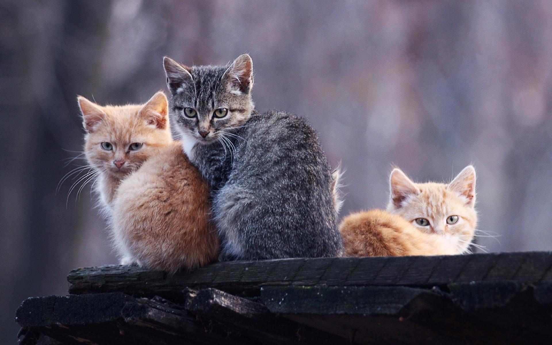 фотографии трех котят все корабли