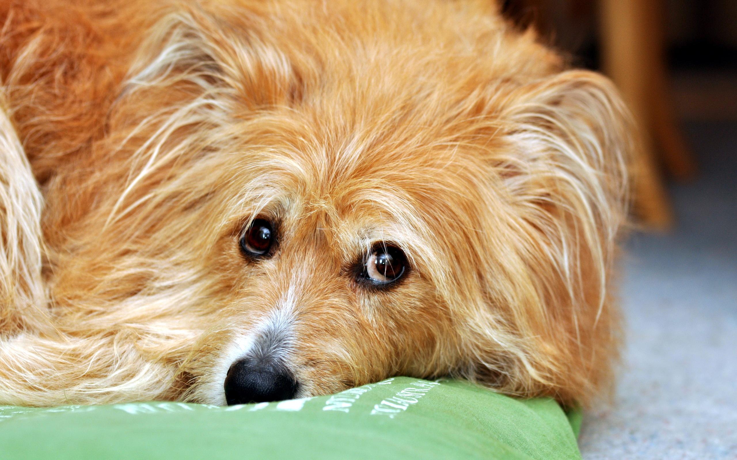 пешей смотреть картинки про домашних собак это оригинальный