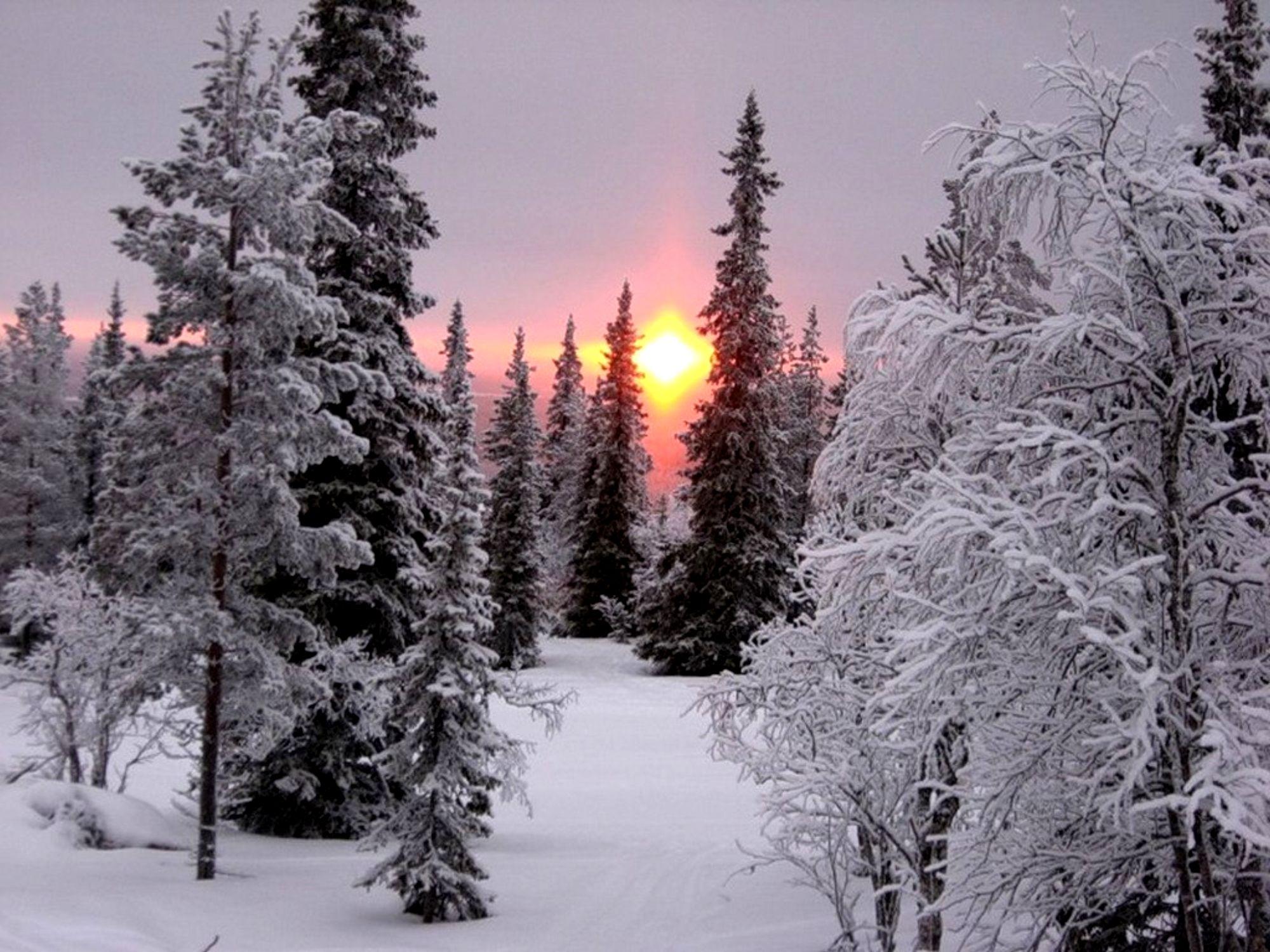 Картинки с добрым утром зимний пейзаж профи