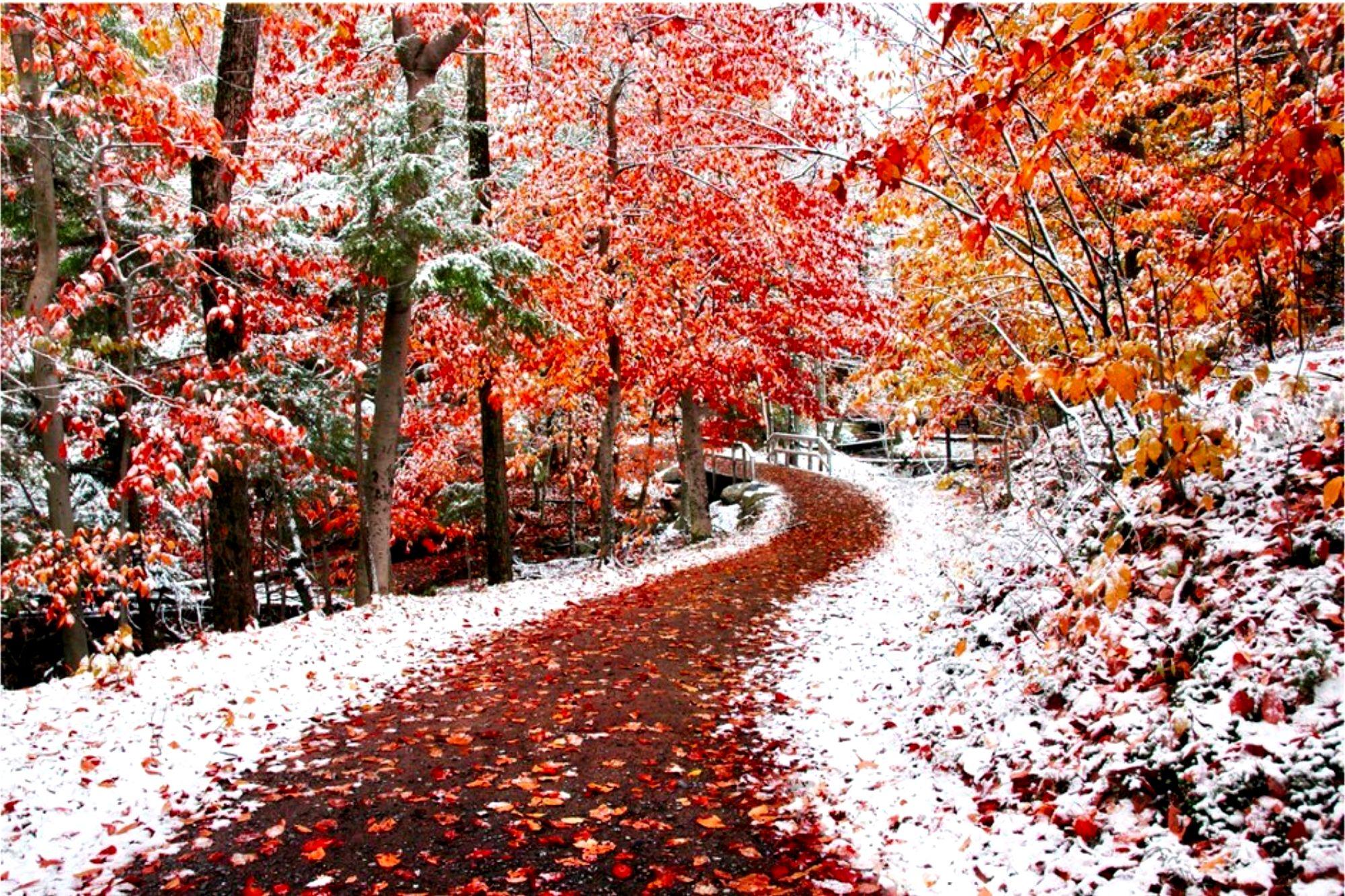Обои для рабочего стола начало зимы природа