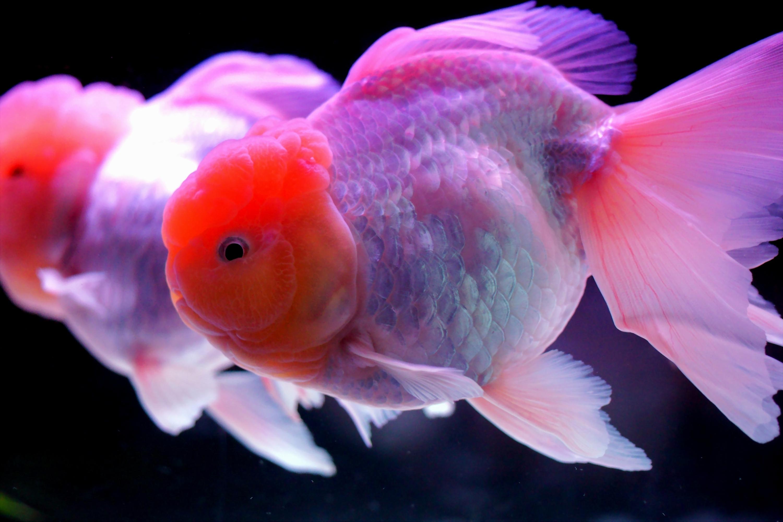 этом свидетельствуют картинки разных рыбок этого очищаю картофель