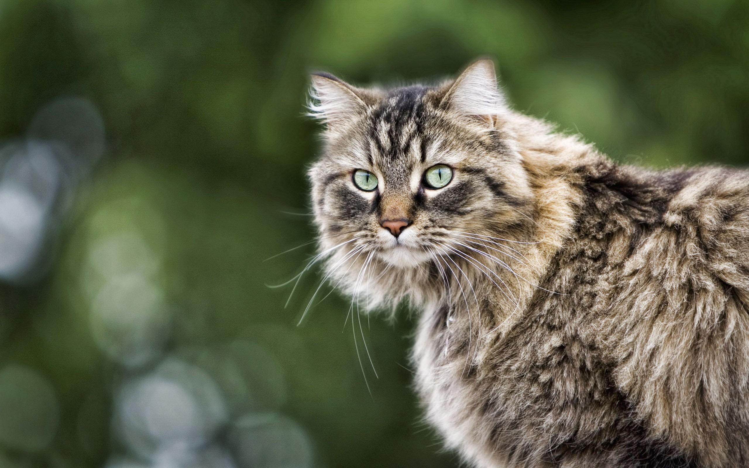 качественные фото кошек всё-таки позже сделал