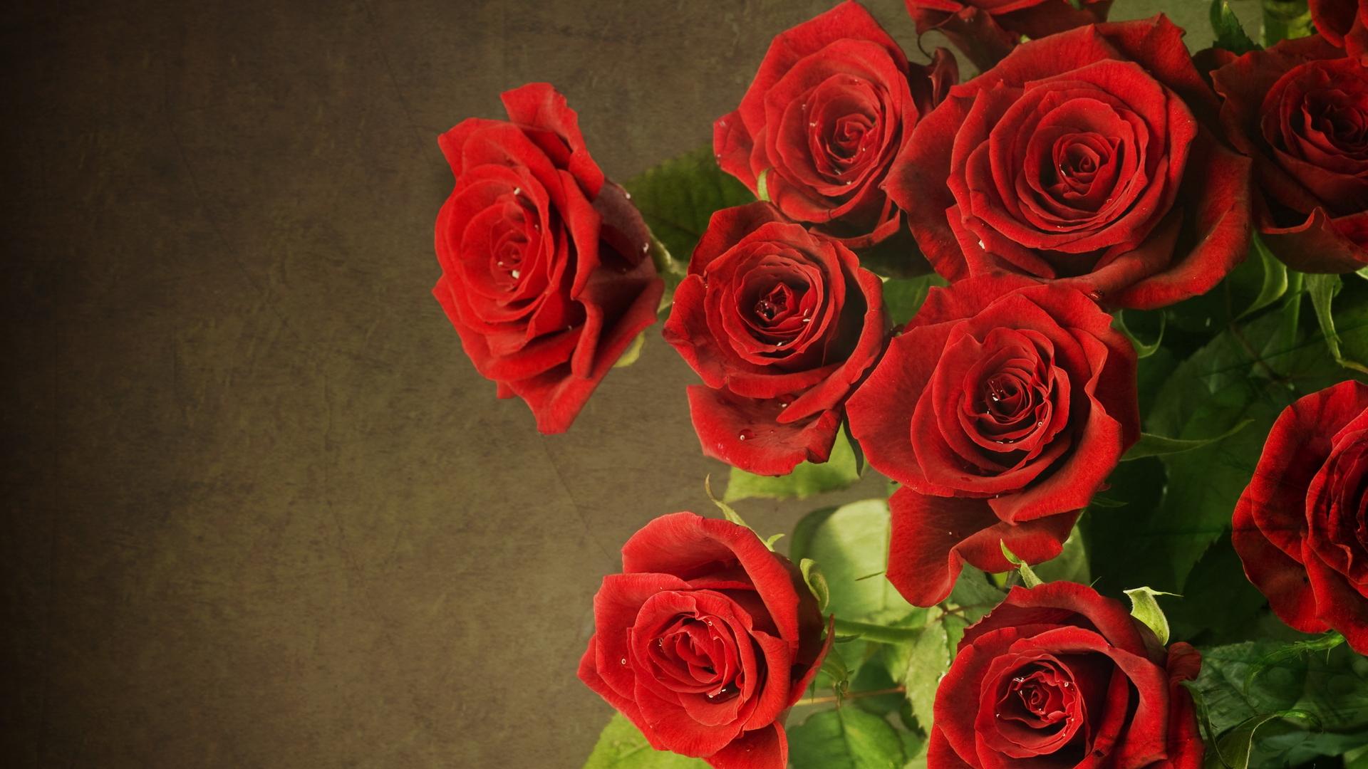 Обои на рабочий стол роза красная