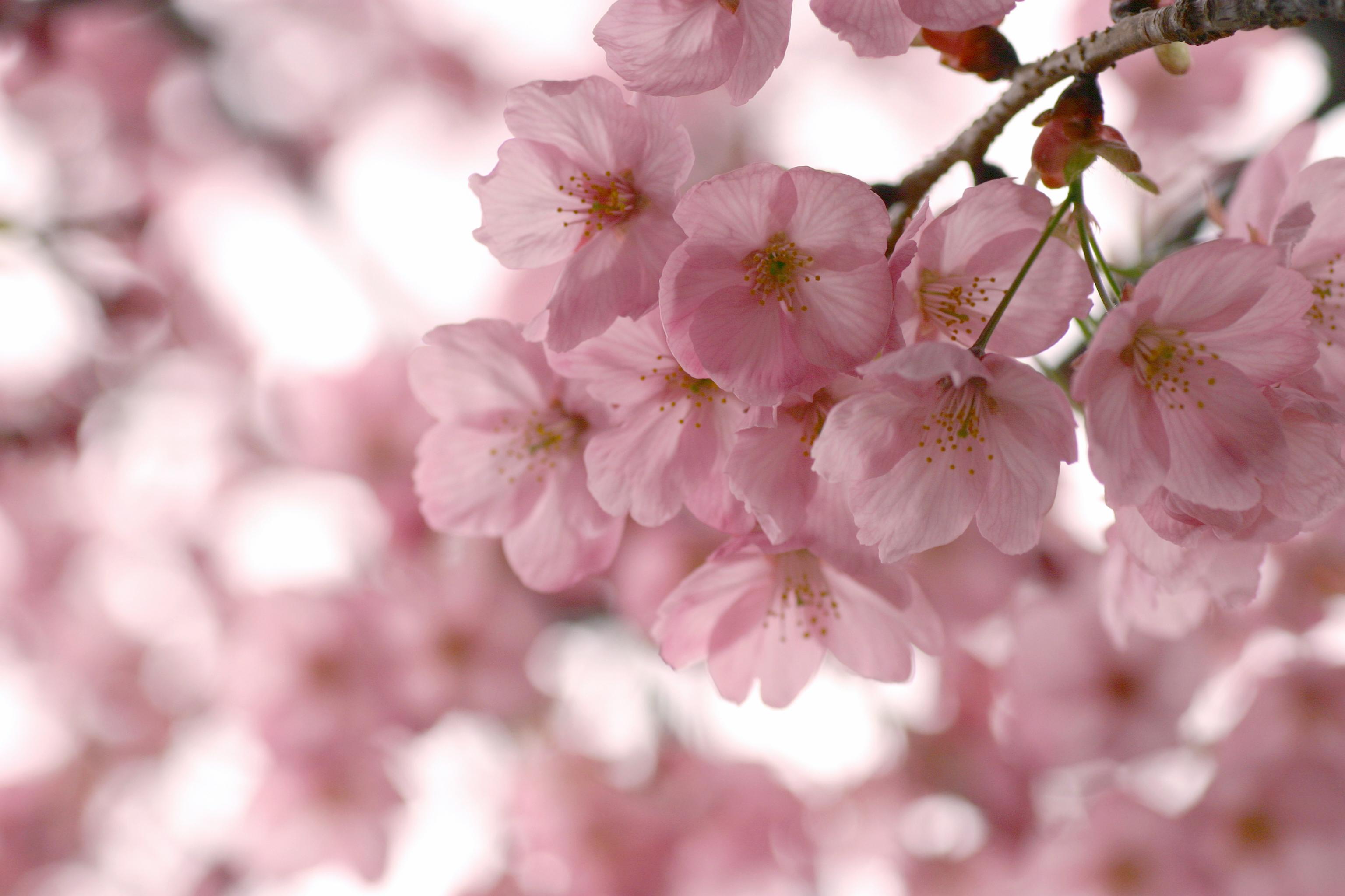 Картинки весна обои на компьютер