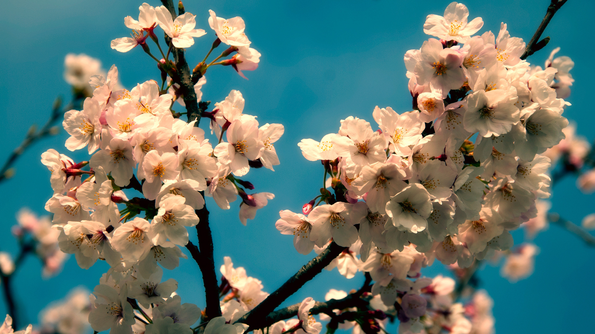 ресторанам красивые картинки весна на рабочий стол широкоформатные камень