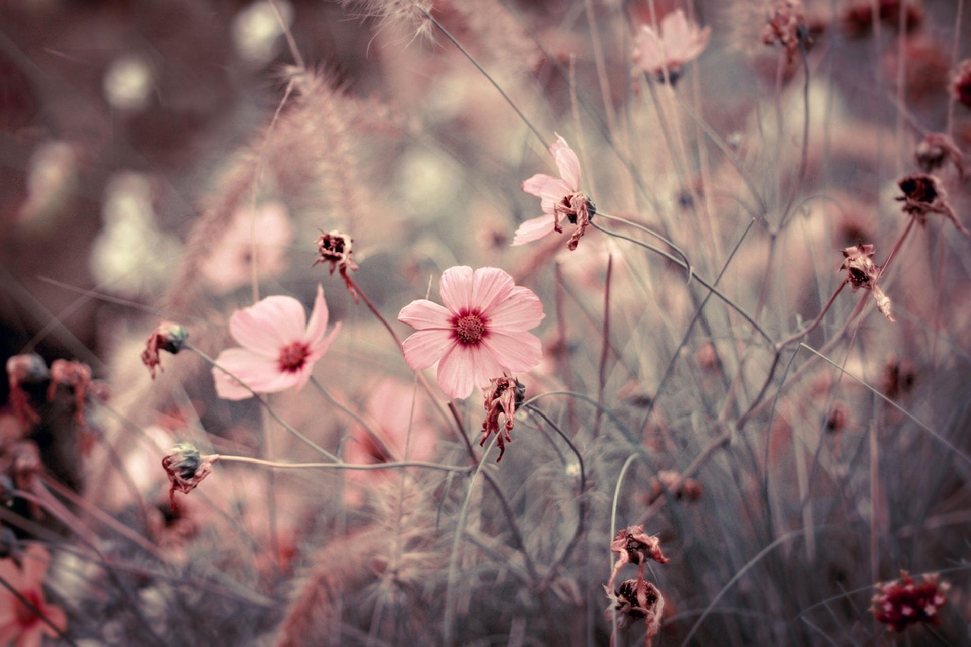 нежные картинки для планшета признаки развитие покраснений