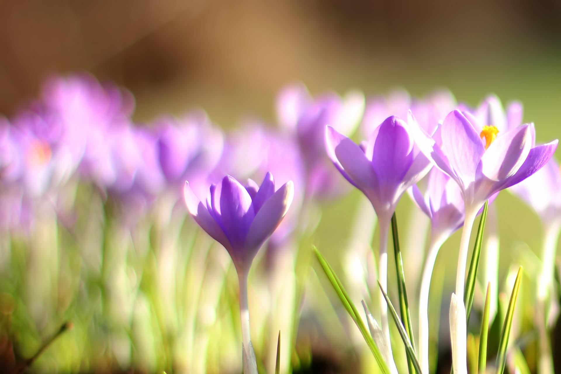 руками красивые картинки весна на рабочий стол широкоформатные моей