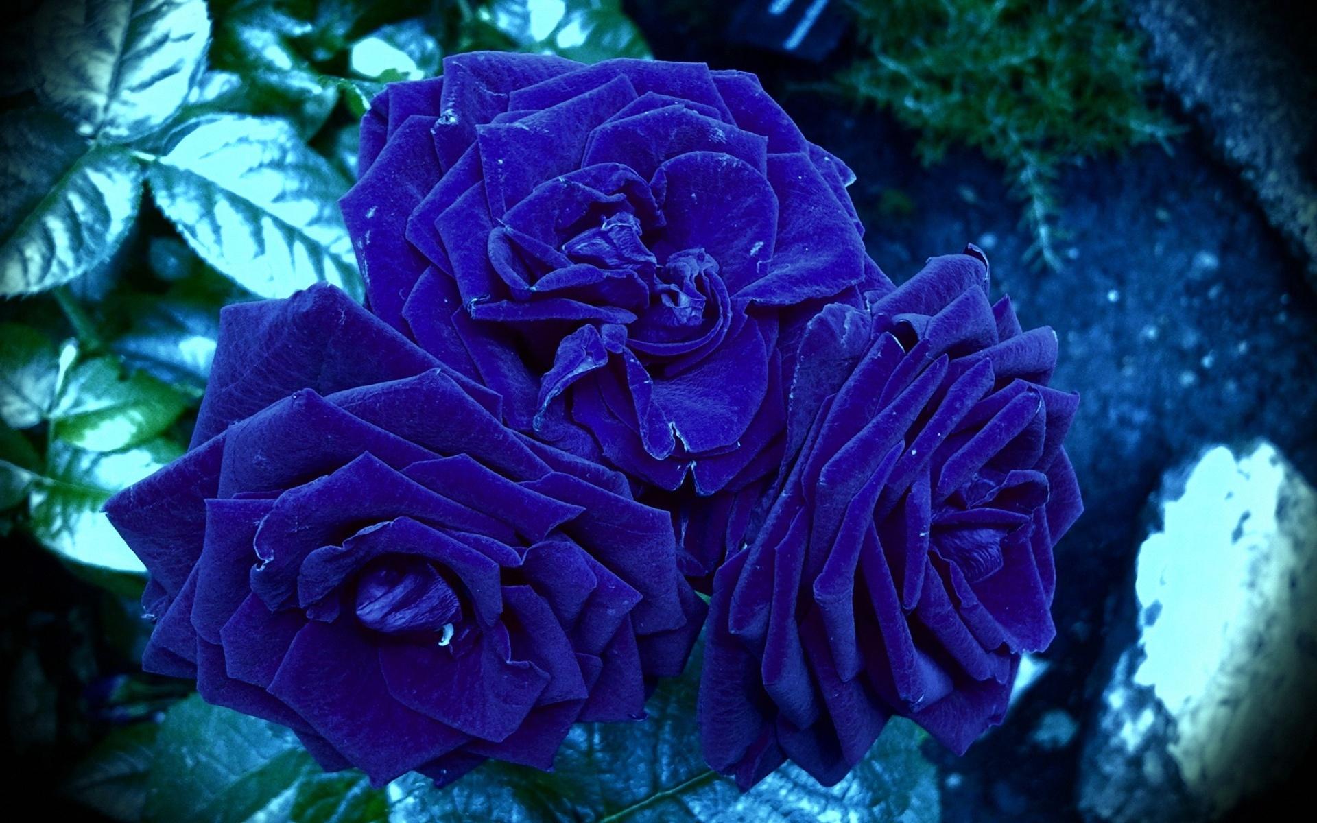 Цветы для вконтакте картинки