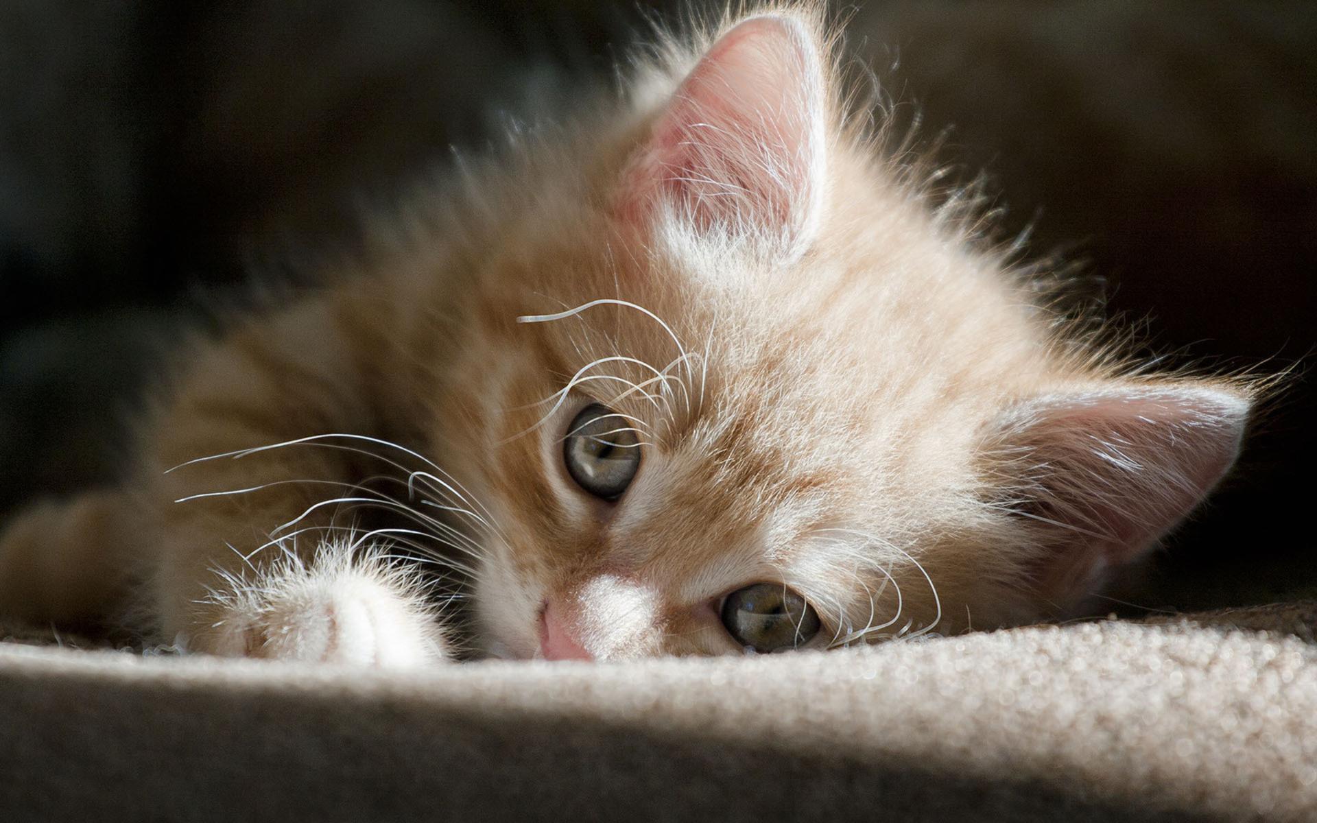 Кошки картинки скучаю