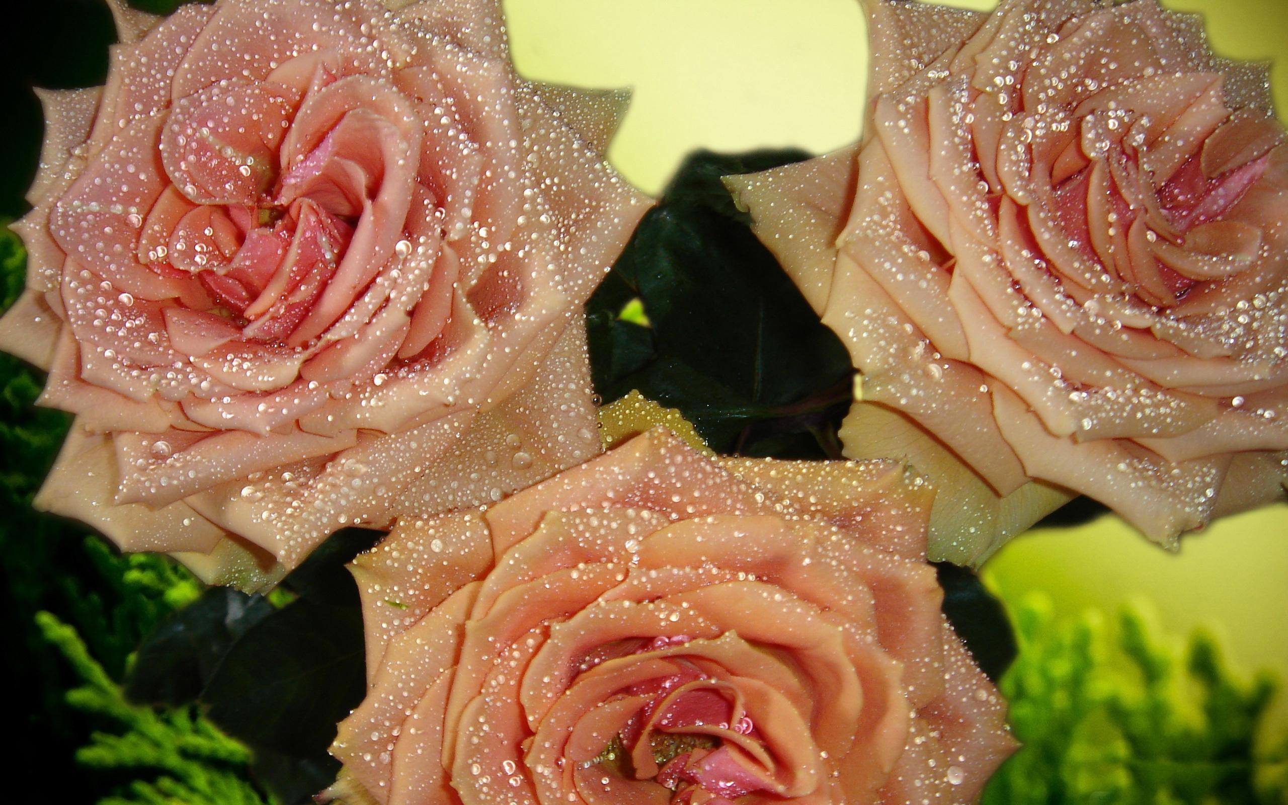 большие посмотреть картинки розы с блестками словам пескова, президенту