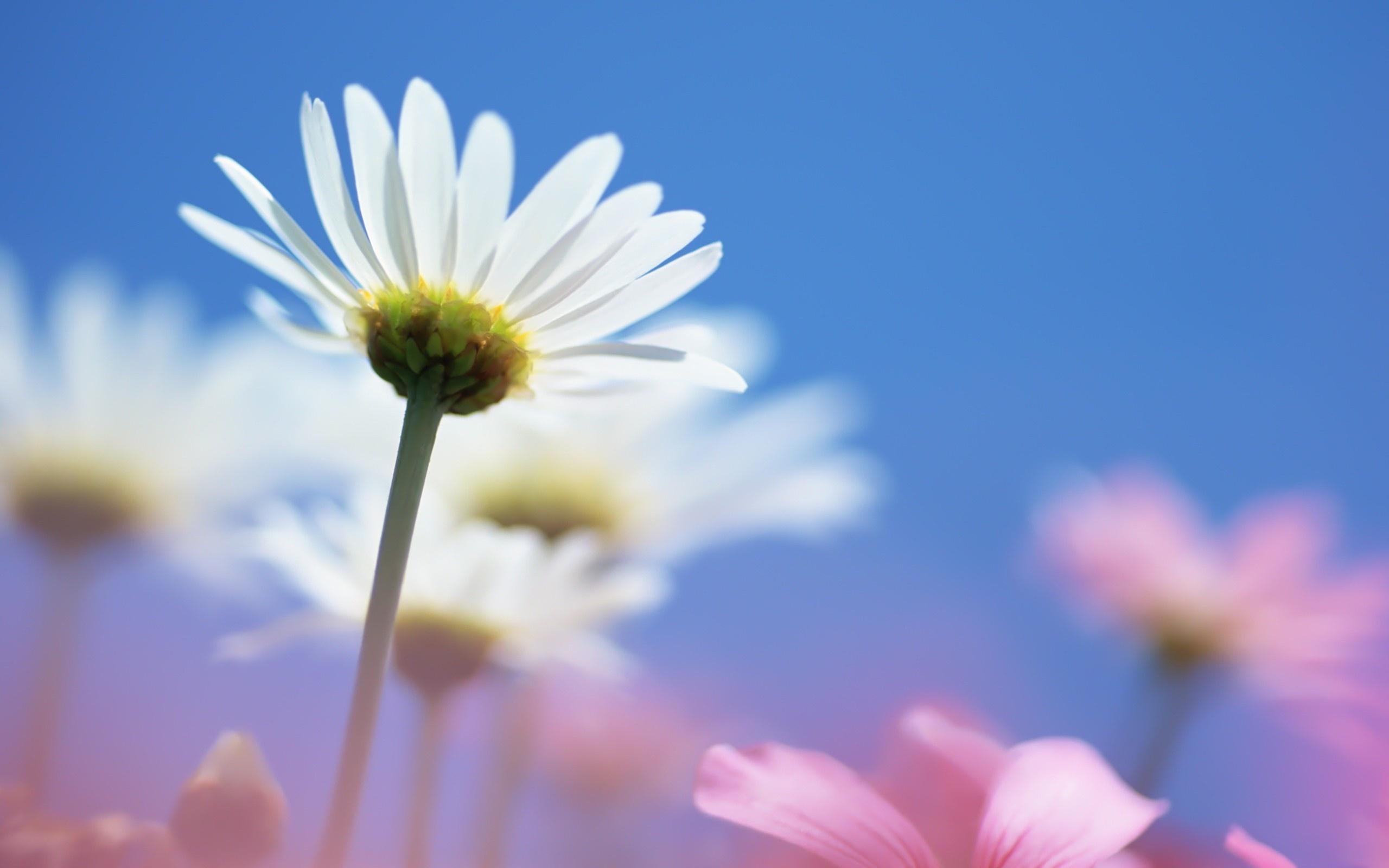 Небо и цветы картинки