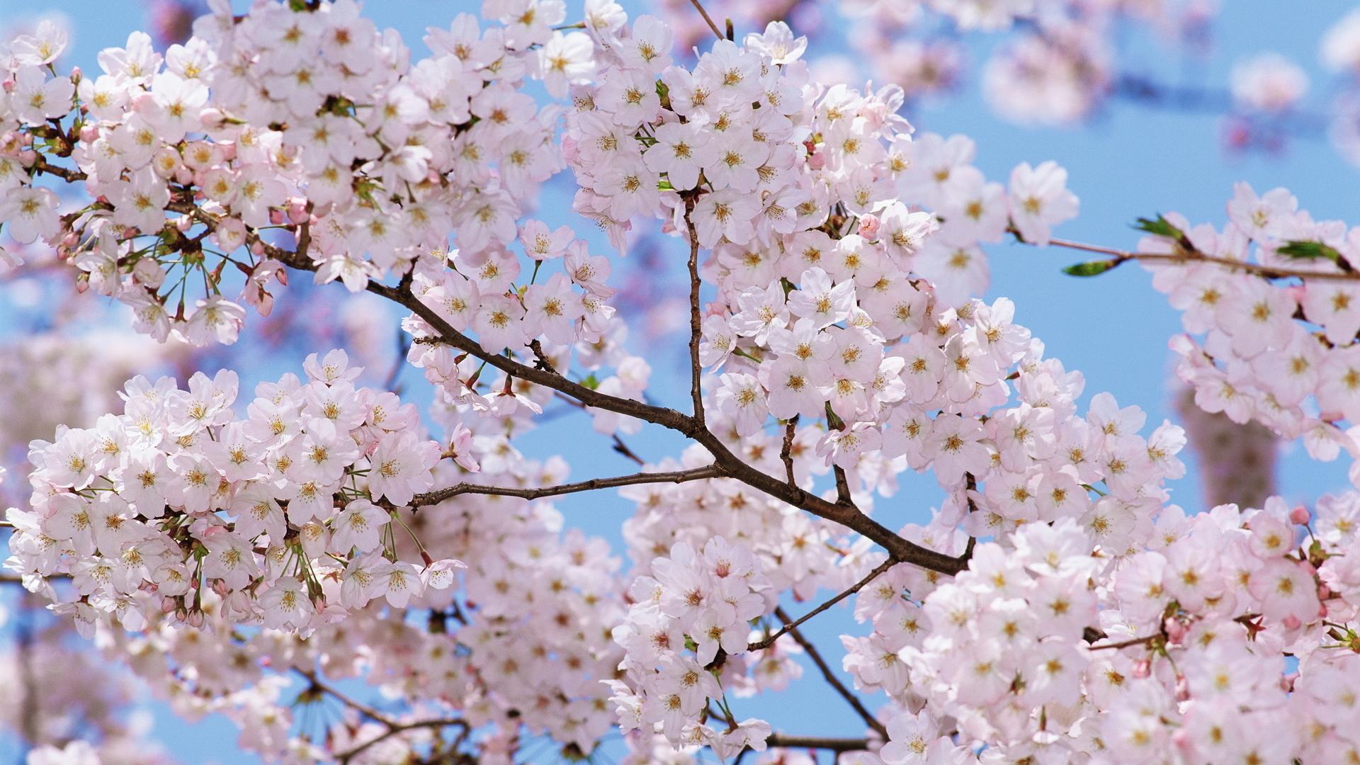 красивые картинки весна на рабочий стол широкоформатные выполнена