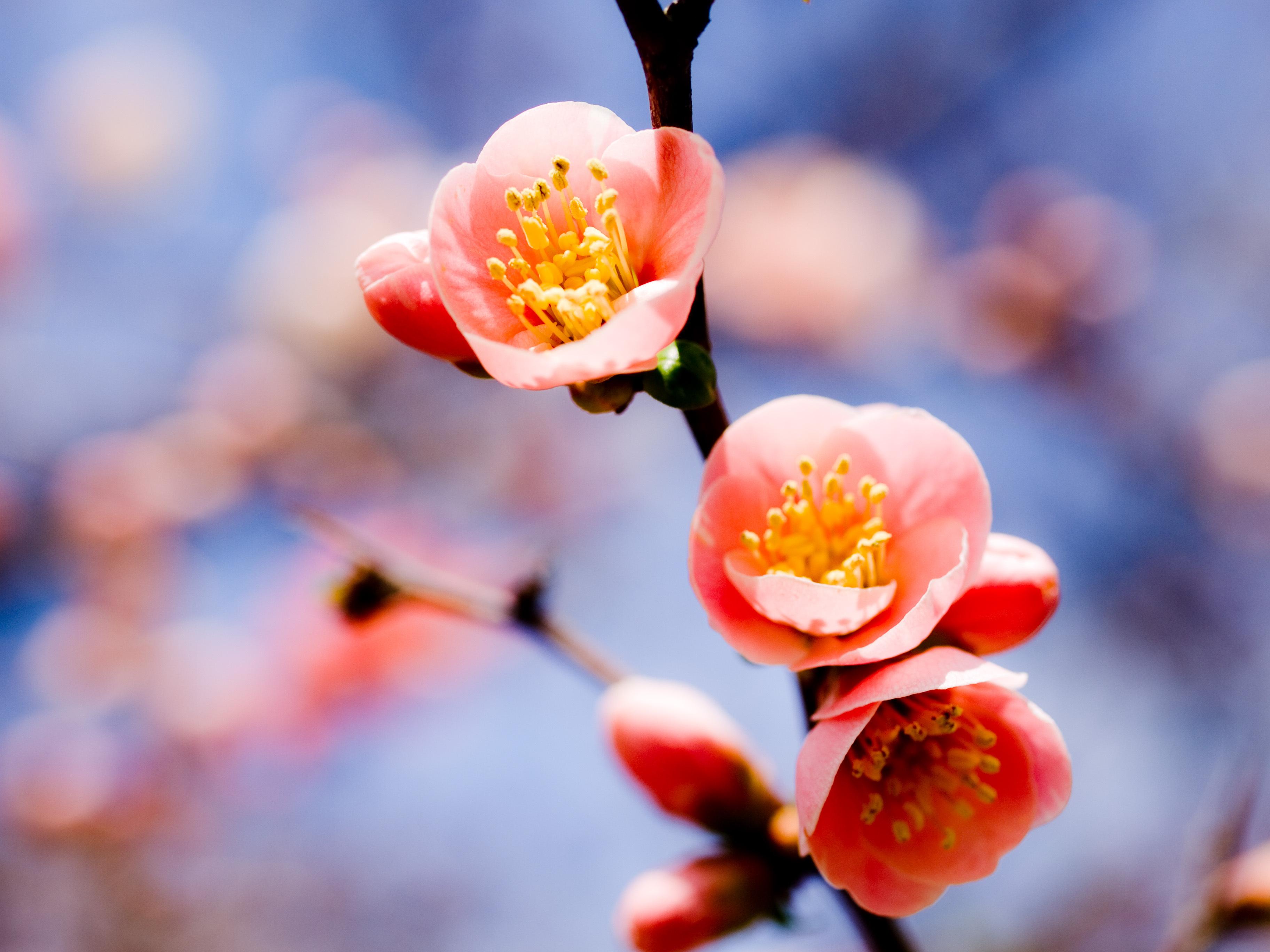 картинки на планшет весна район