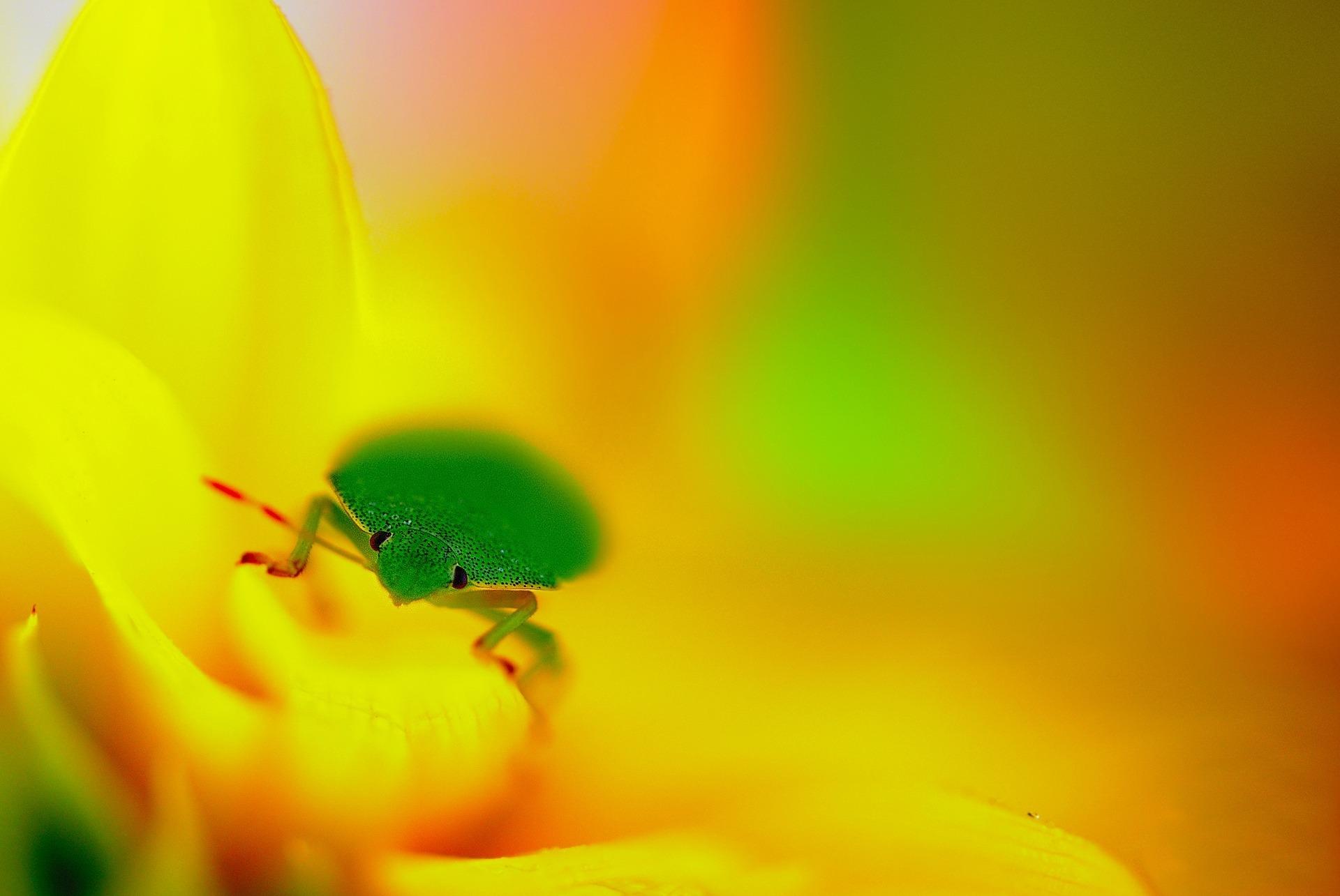 могут присесть картинки на рабочий стол зеленый желтый встрече