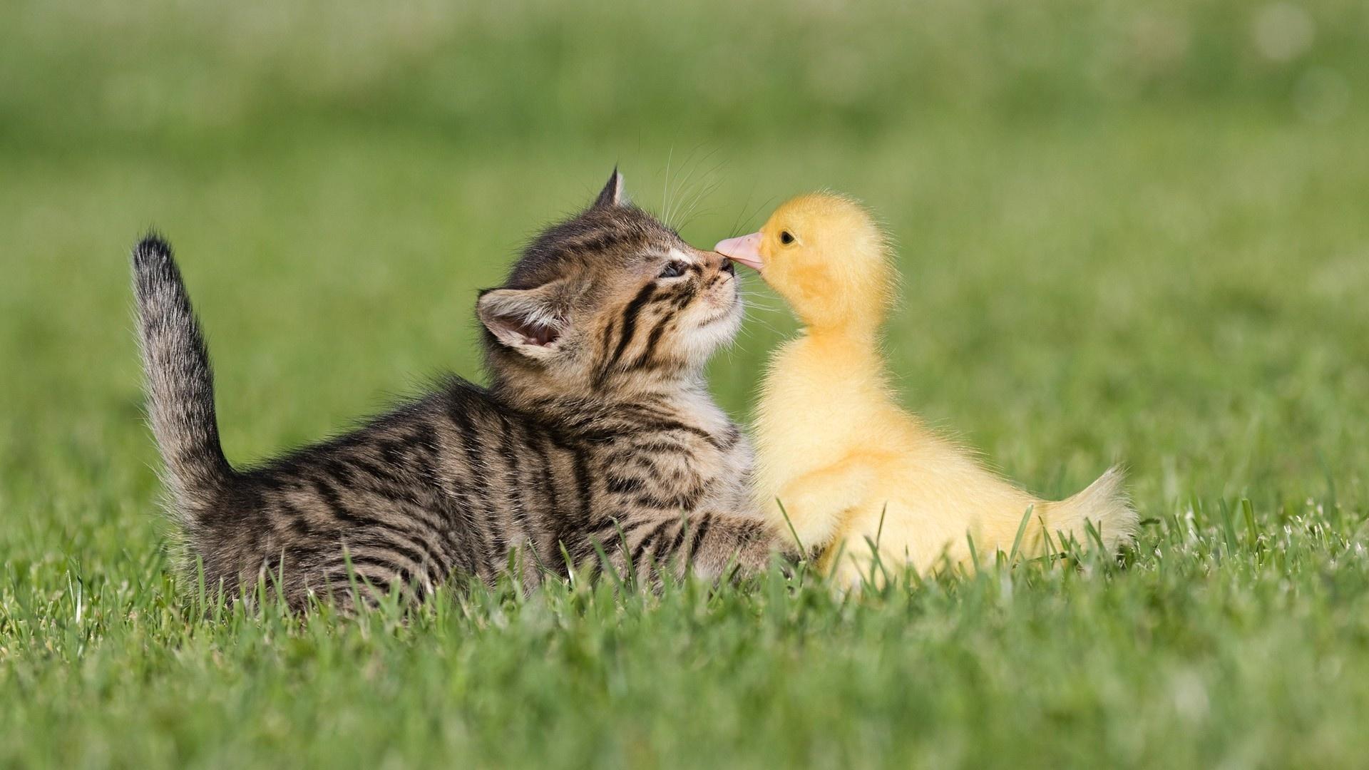 Обои для рабочего стола животные малыши