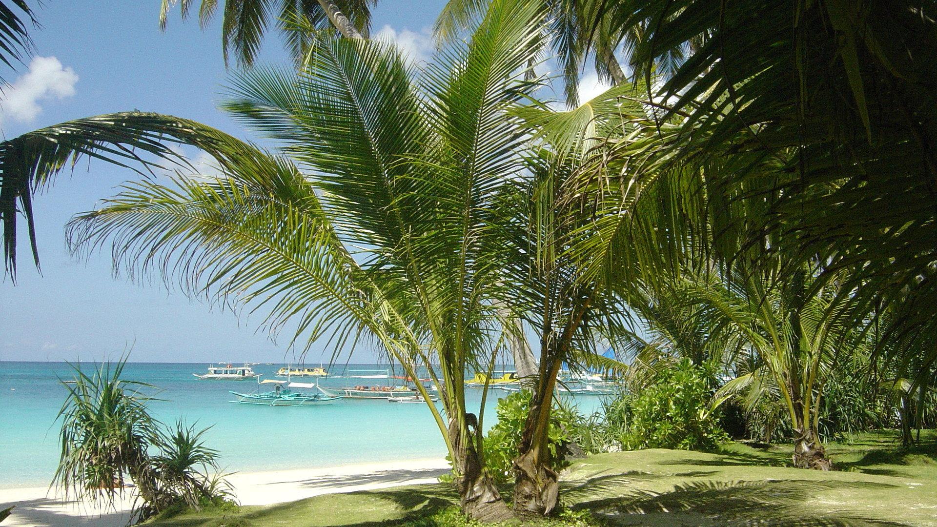 фото пальмы высокого качества есть