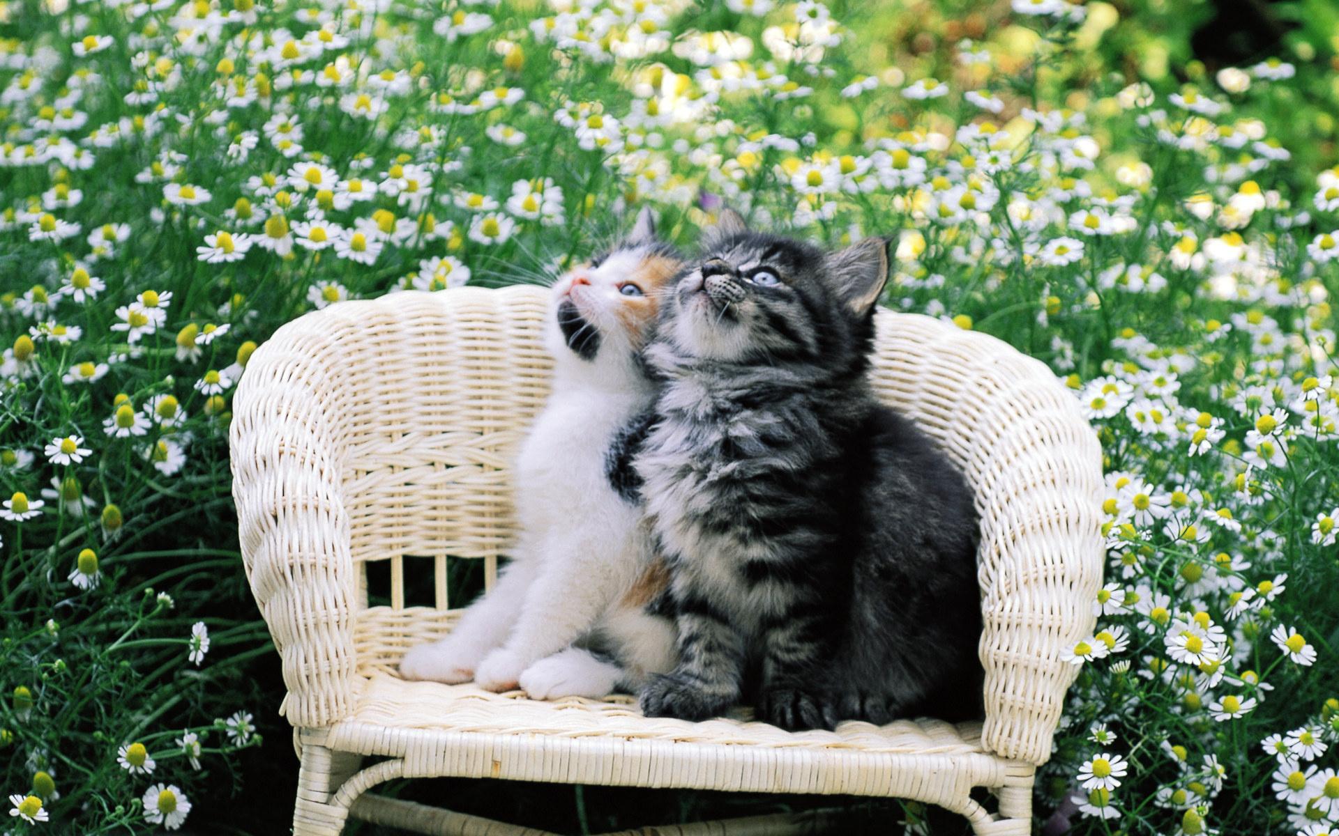 таунхаусов картинки на рабочий стол котята в природе посты проектами