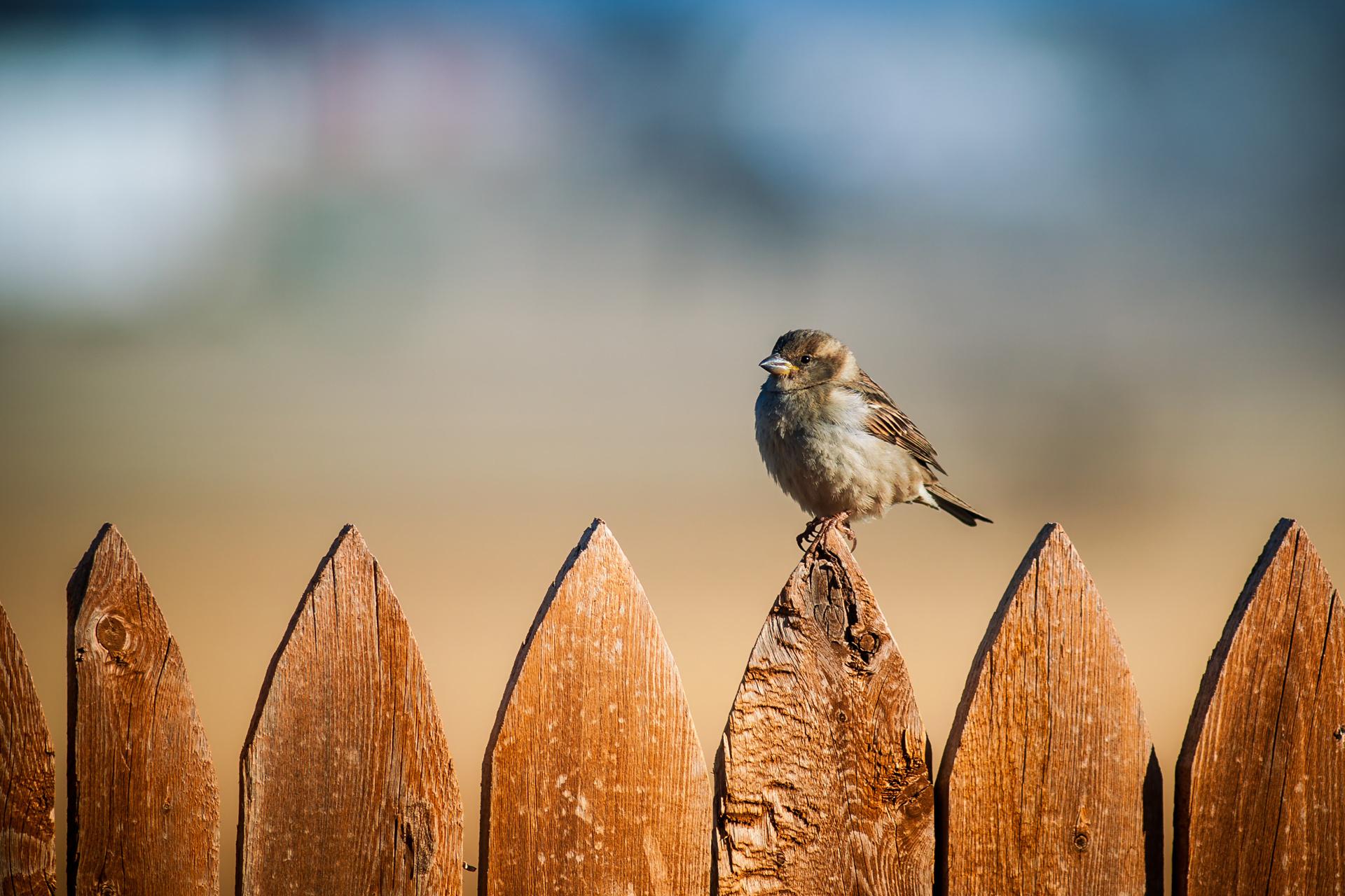 произошедшей картинка птичка сидит стрелы