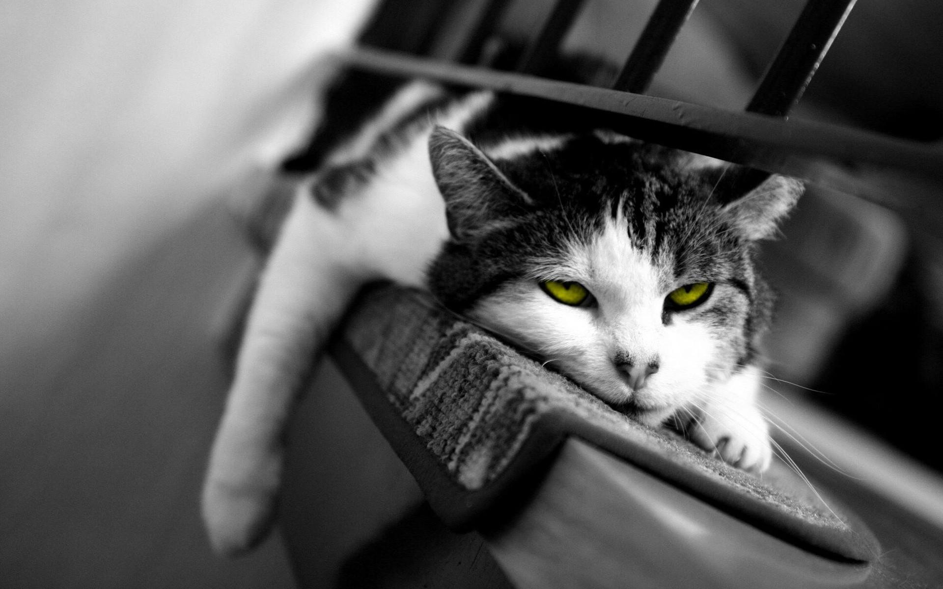 картинки котики усталые минуты после