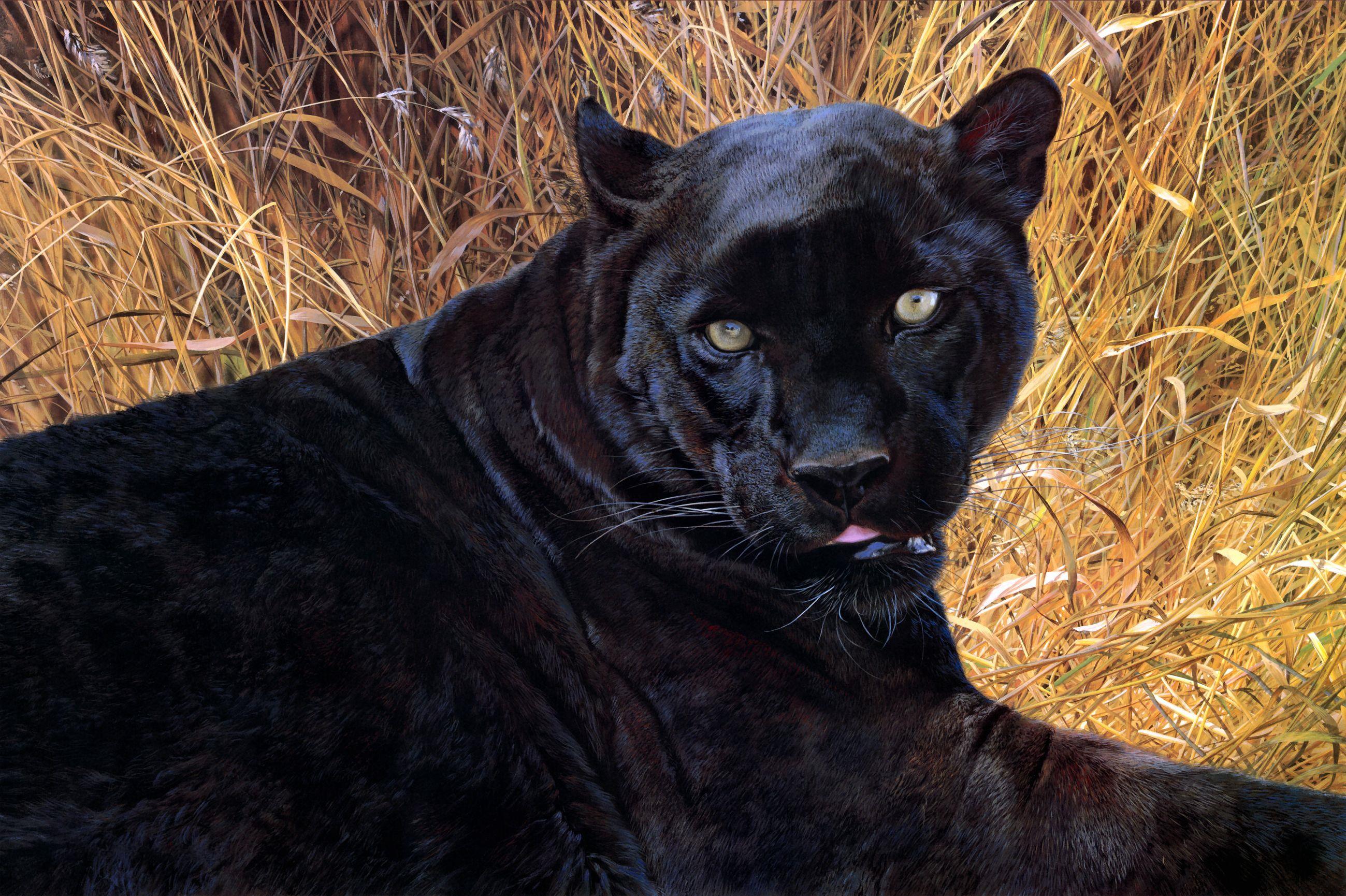 пантера картинки в высоком разрешении сегодня совсем по-другому