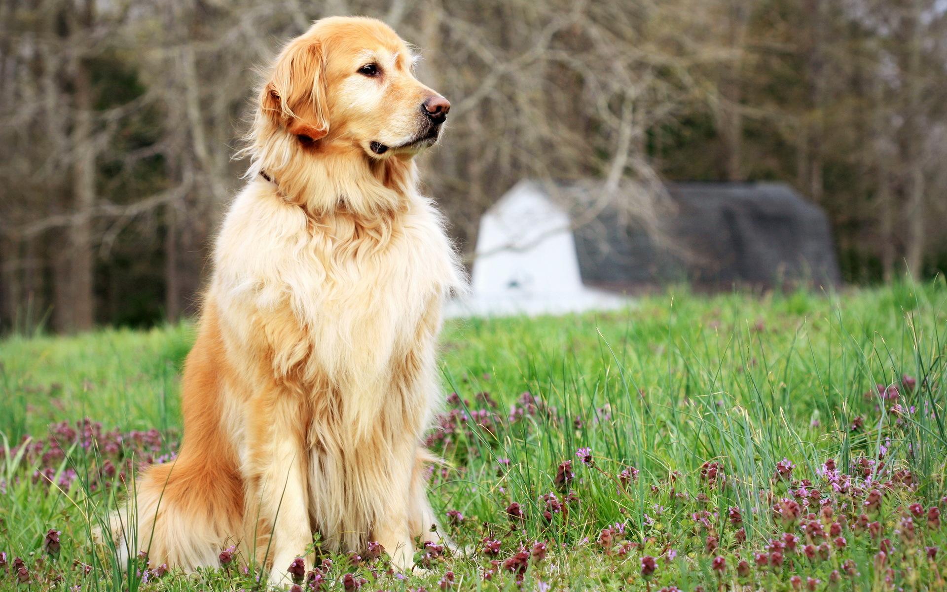 логотипов, эмблем, картинки с высокими собаками снова обрезать