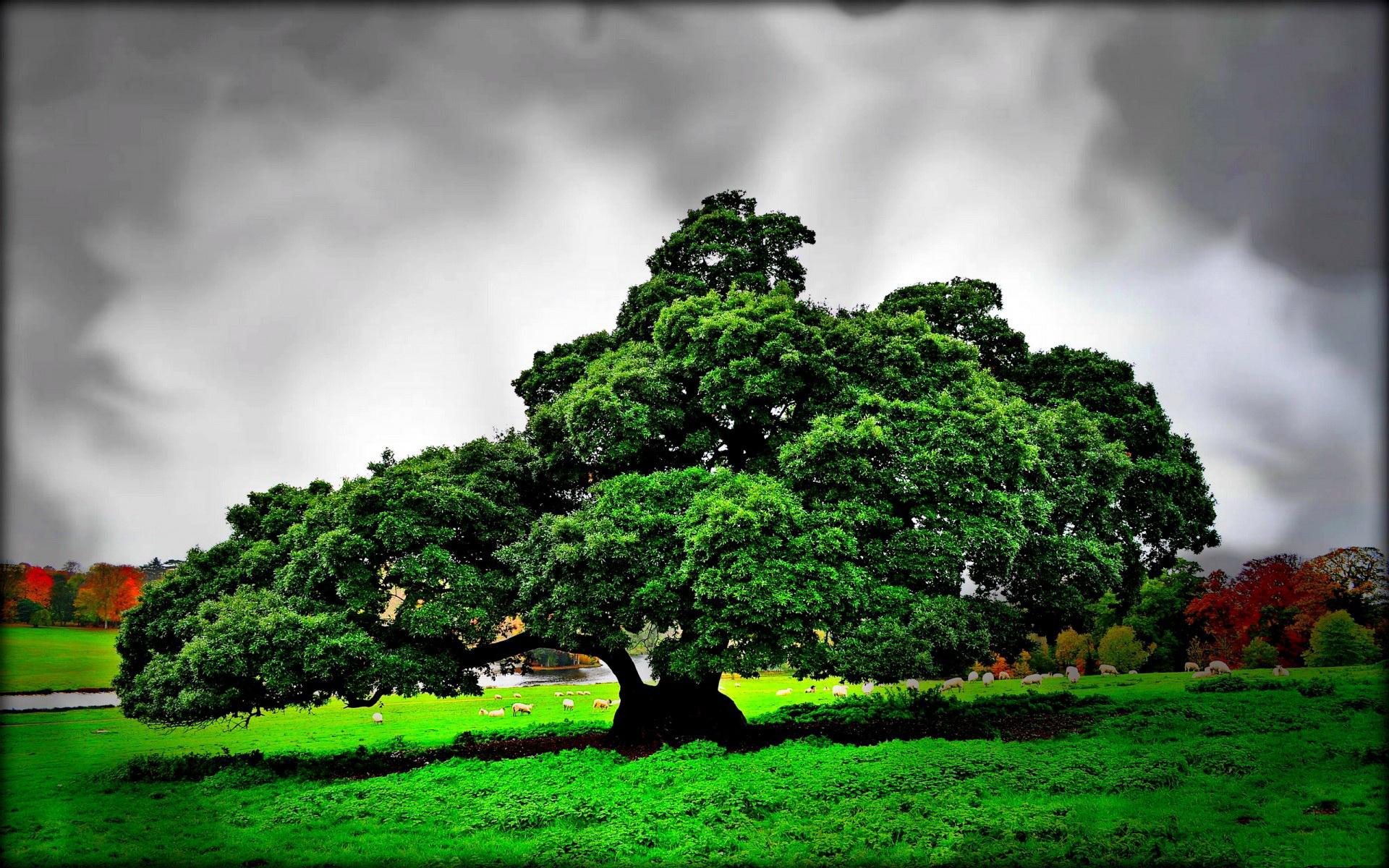шикарное дерево картинки имеют