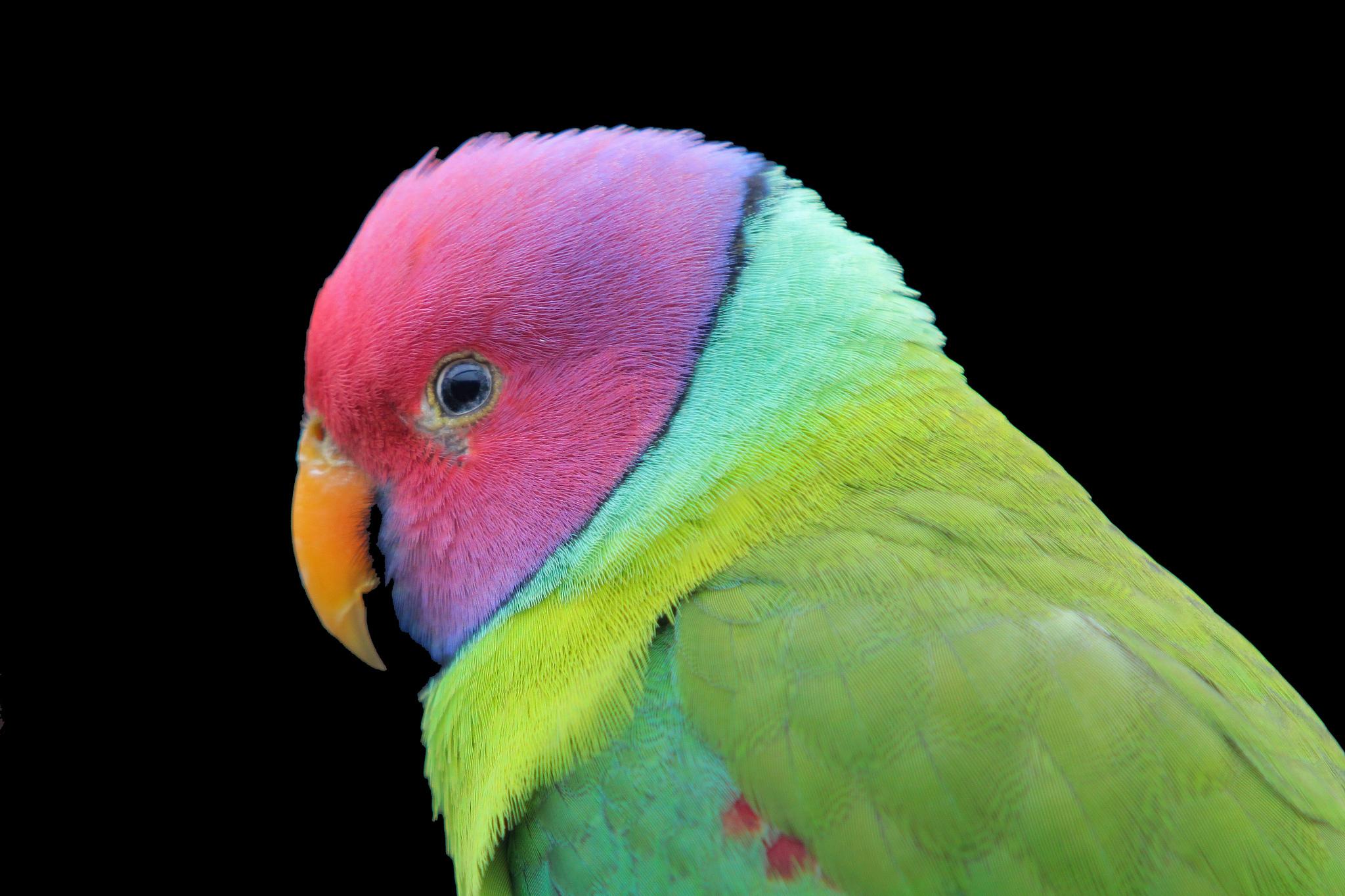 Картинки на тему попугай