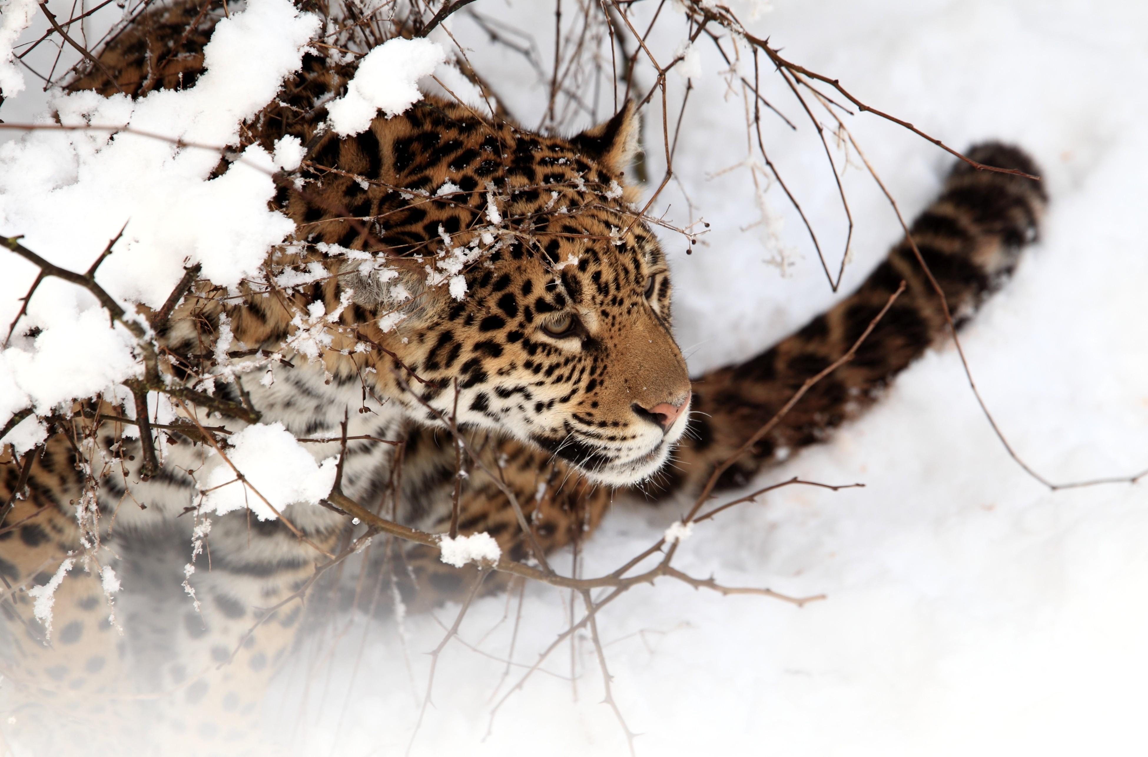 красивые картинки животных в снегу мисхорском