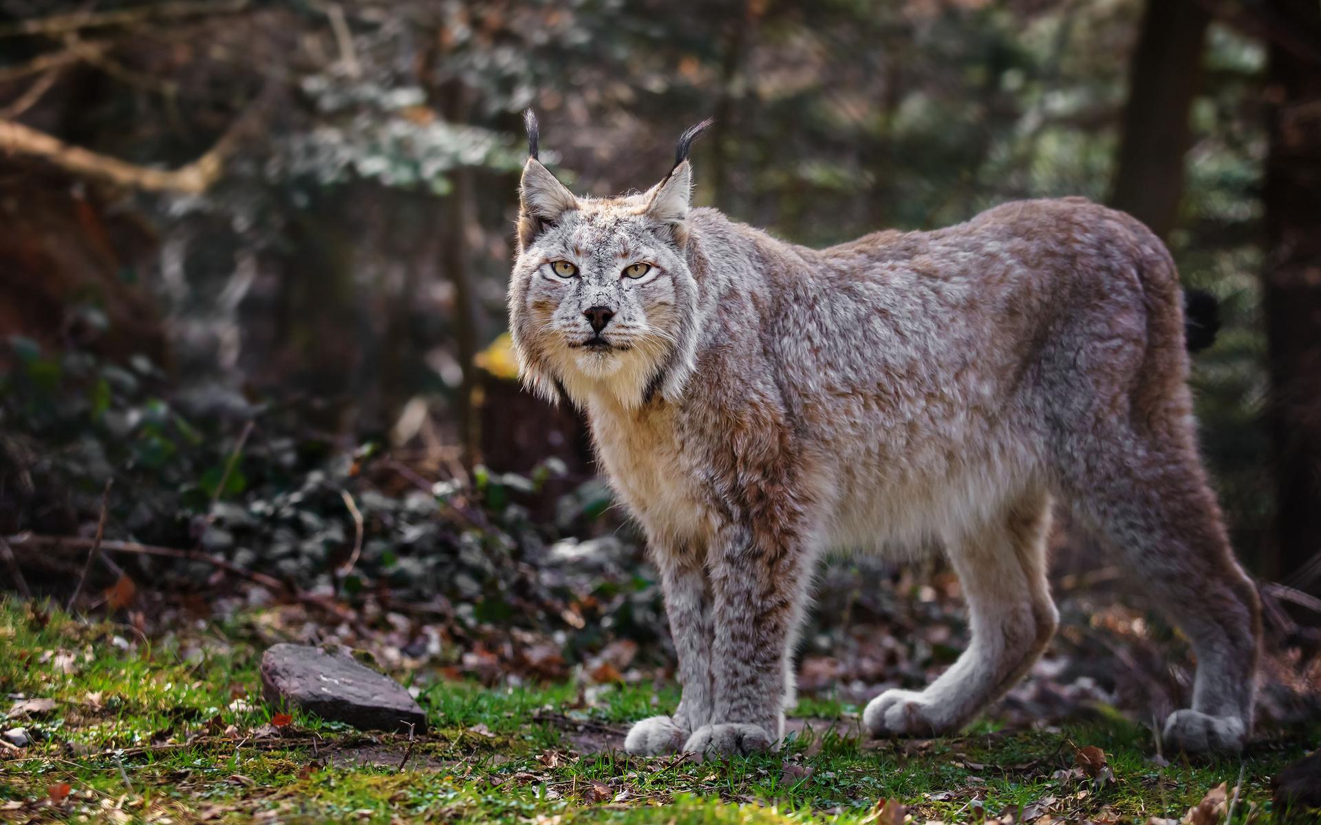 Картинка про диких животных в лесу