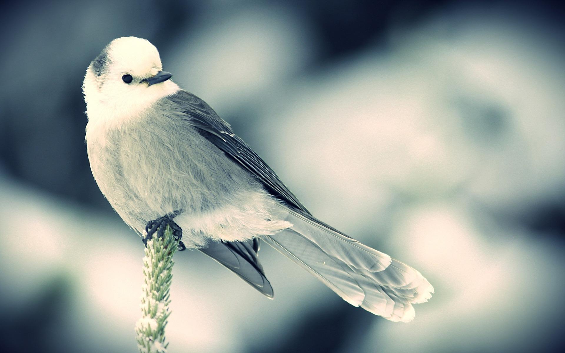 картинка птичка сидит условие наличие