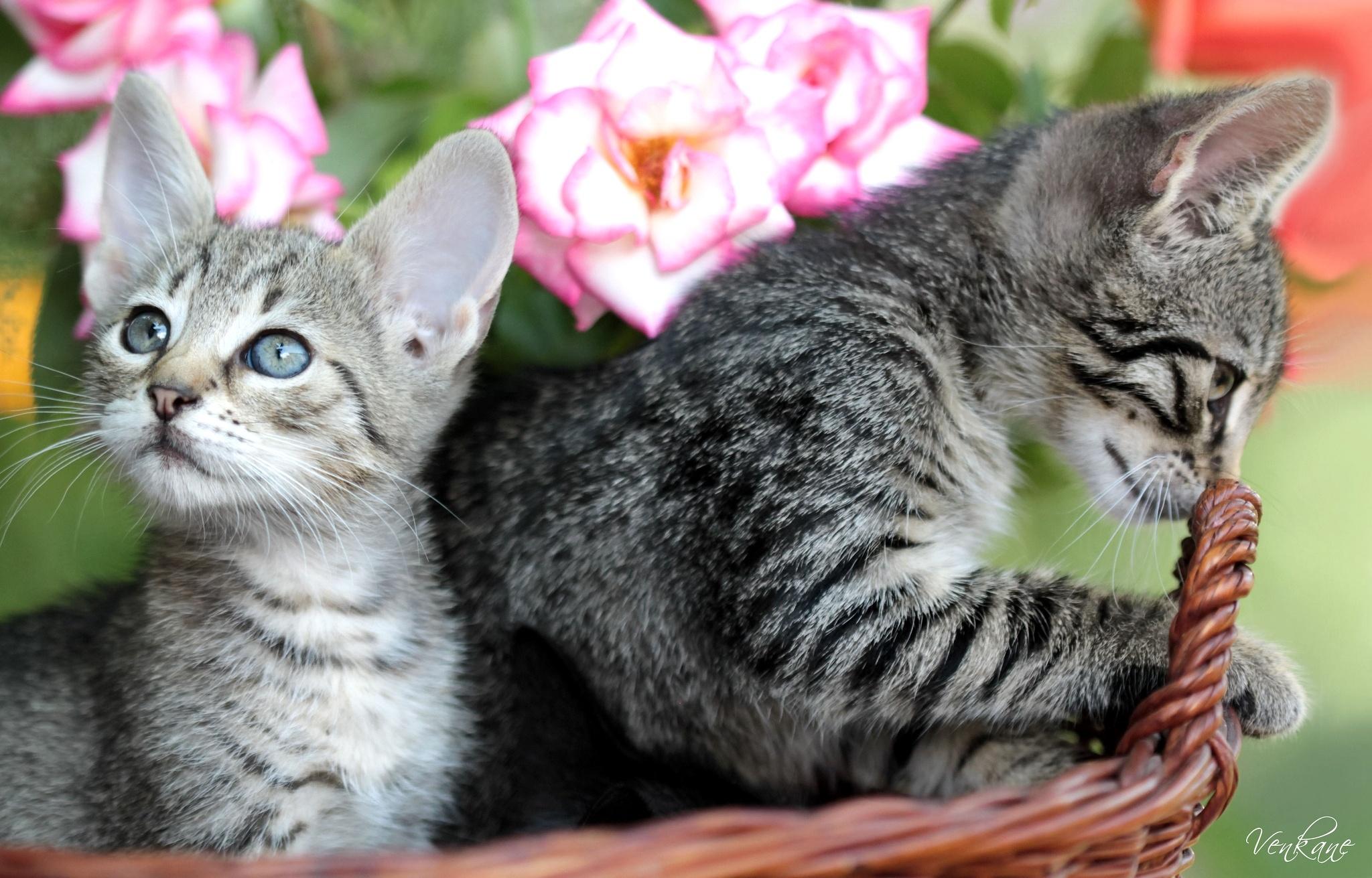 Картинки разных кошек и котят