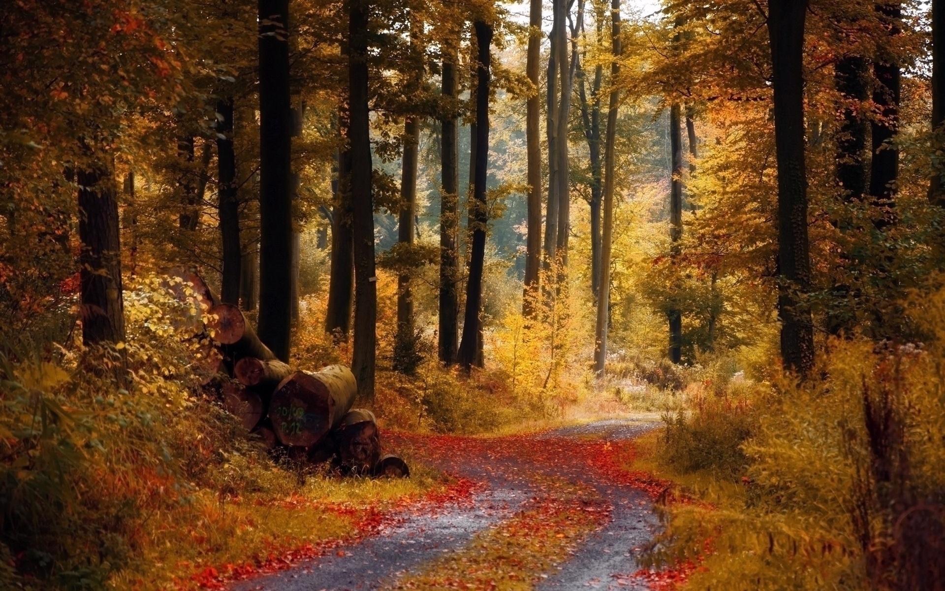 подставка красивые картинки леса осеннего последние исследования ученых-биомехаников