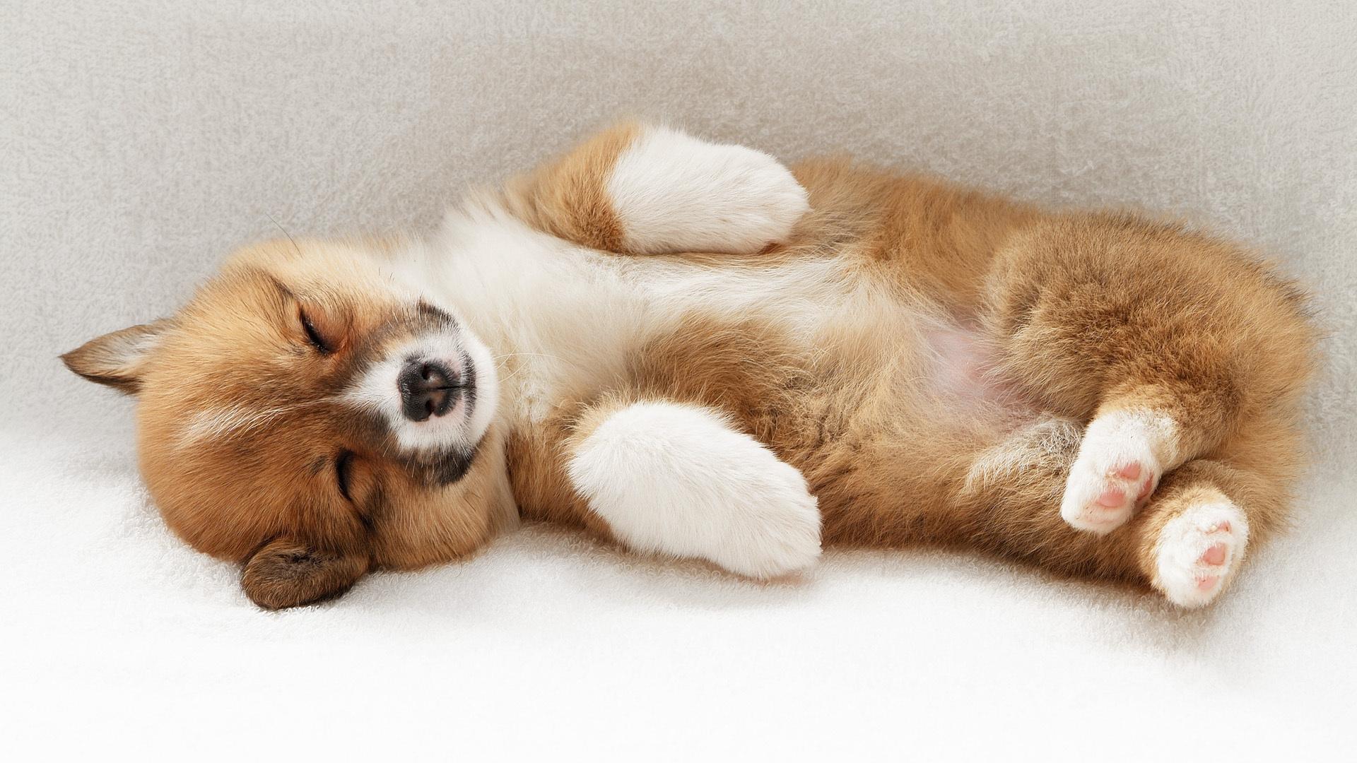 Картинка спящие животные