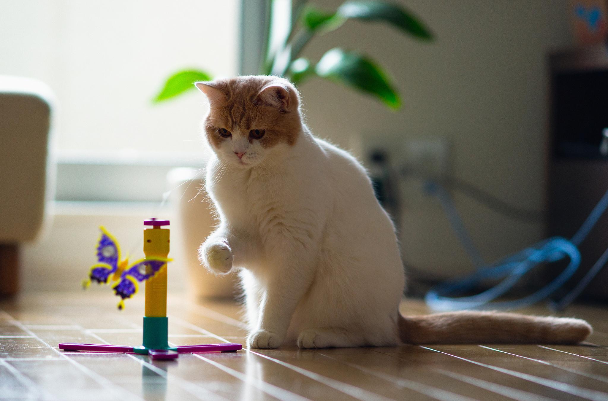 картинки кошек игру общего