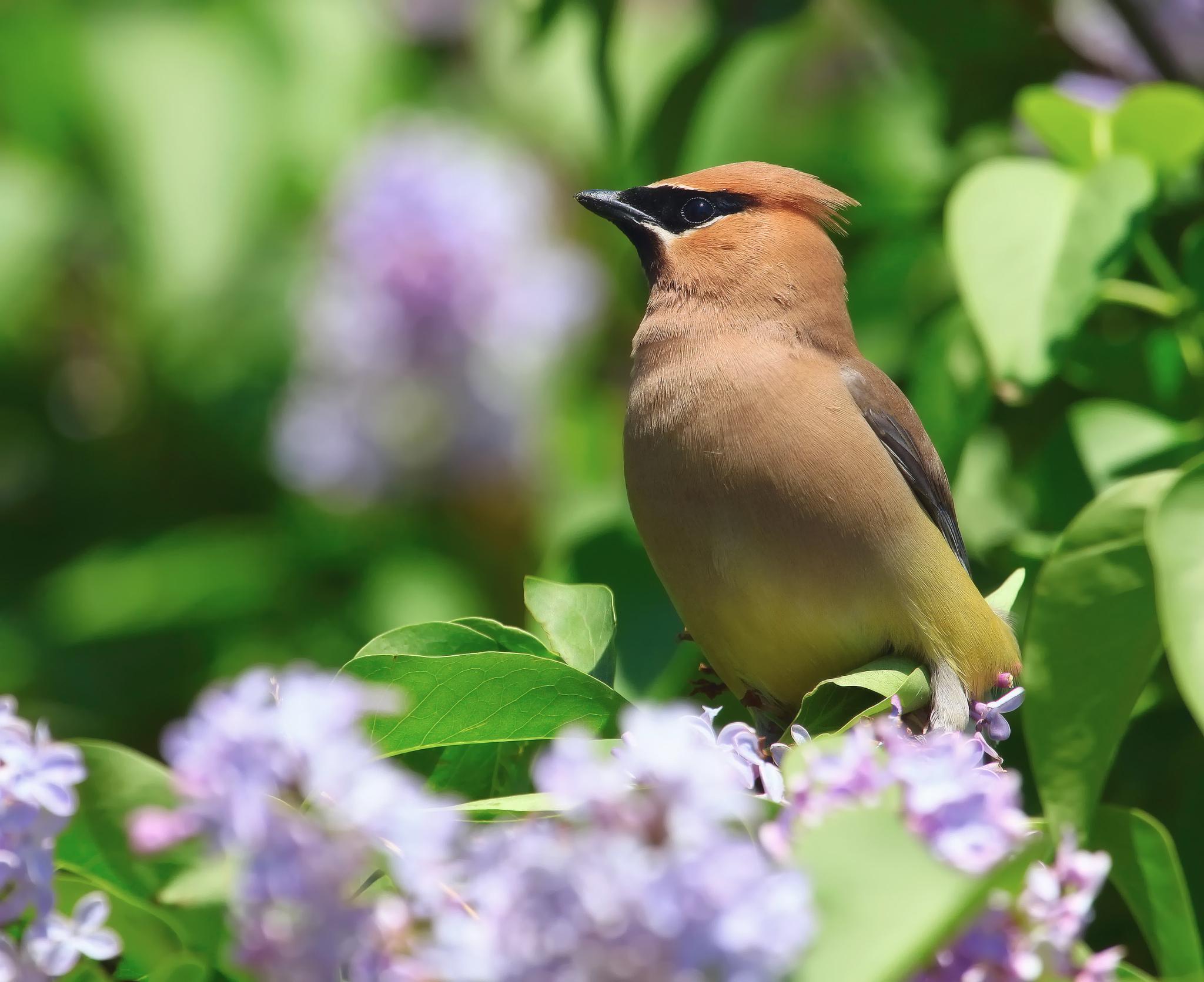 птицы на природе красивые когда