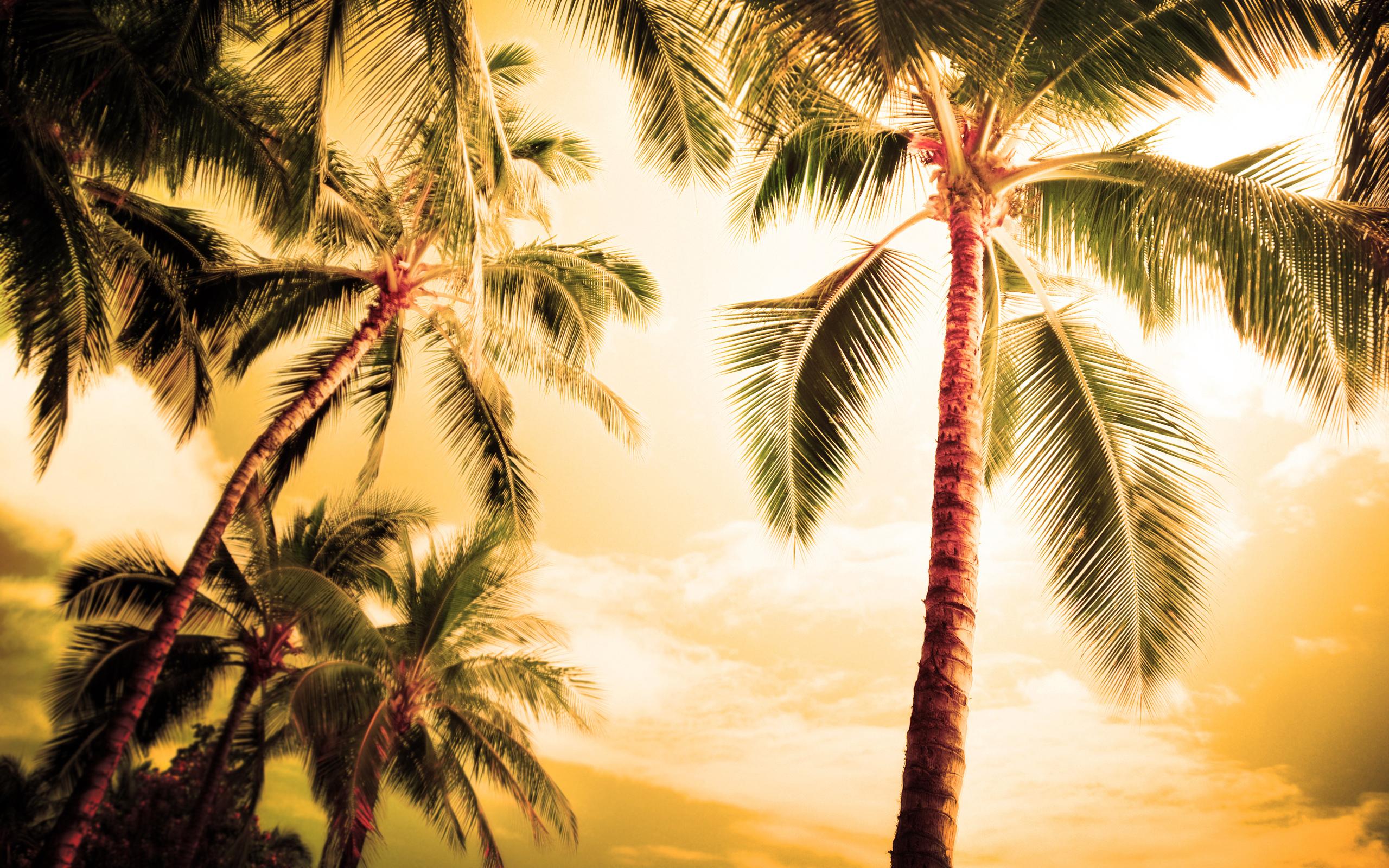 Пальмы картинки на тему