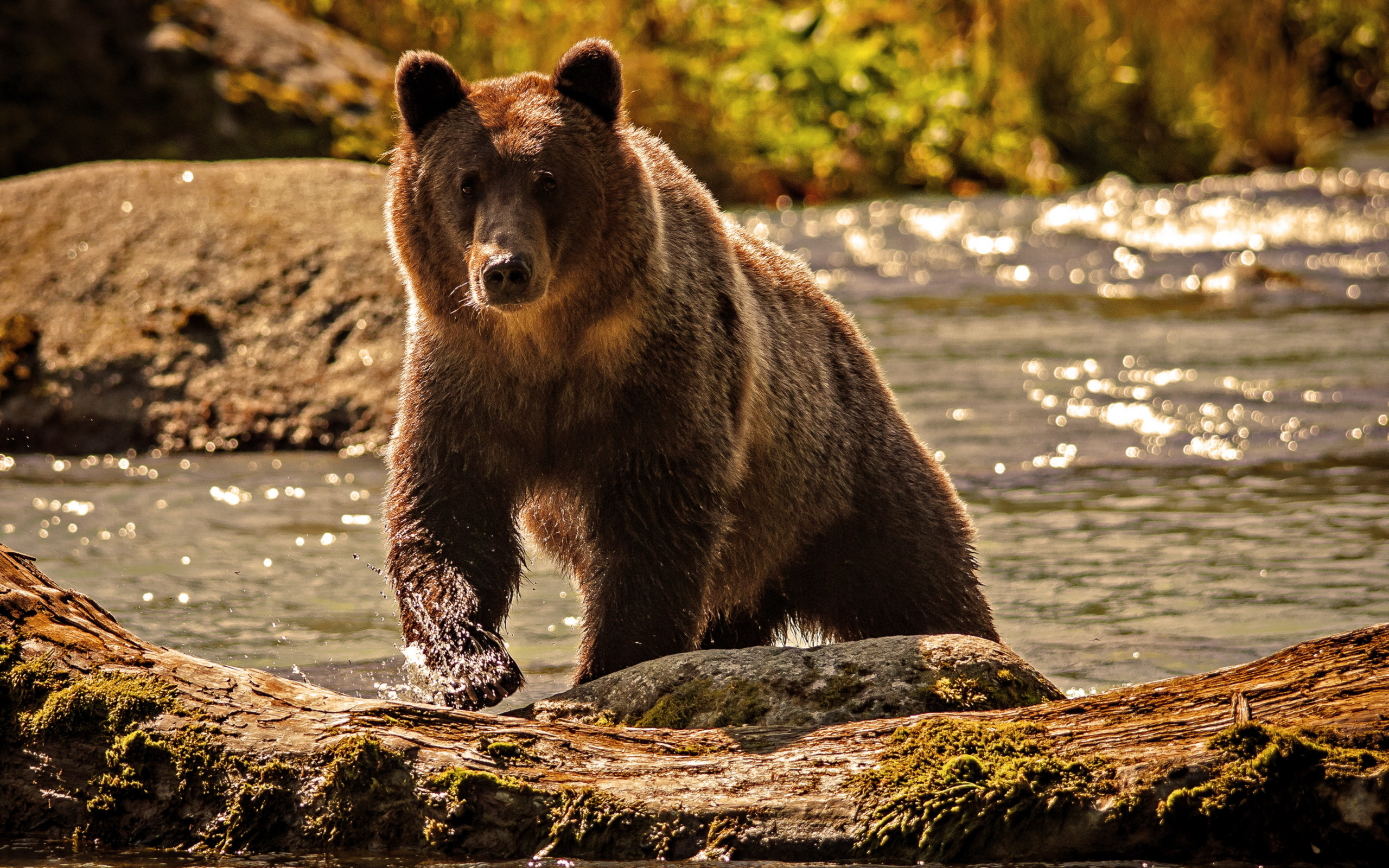 Картинки про медведя фото