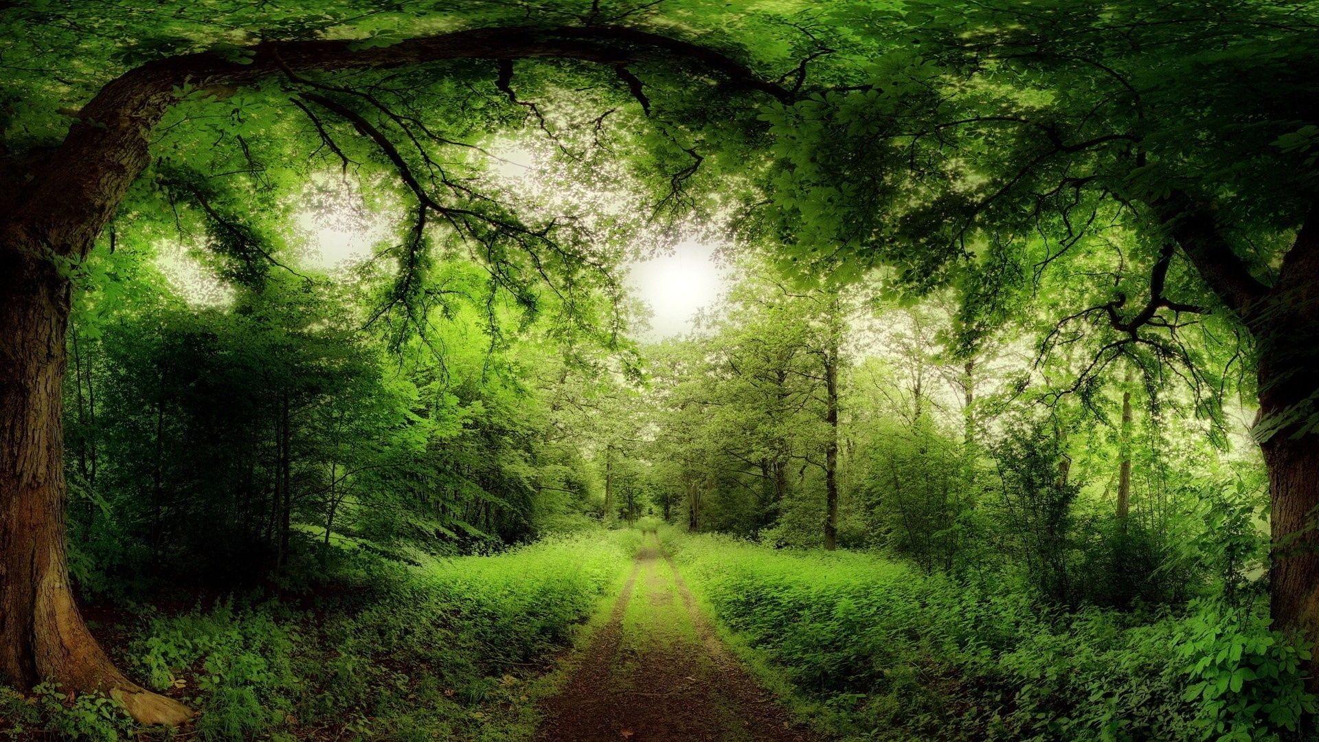 Картинки зеленый лес на рабочий стол