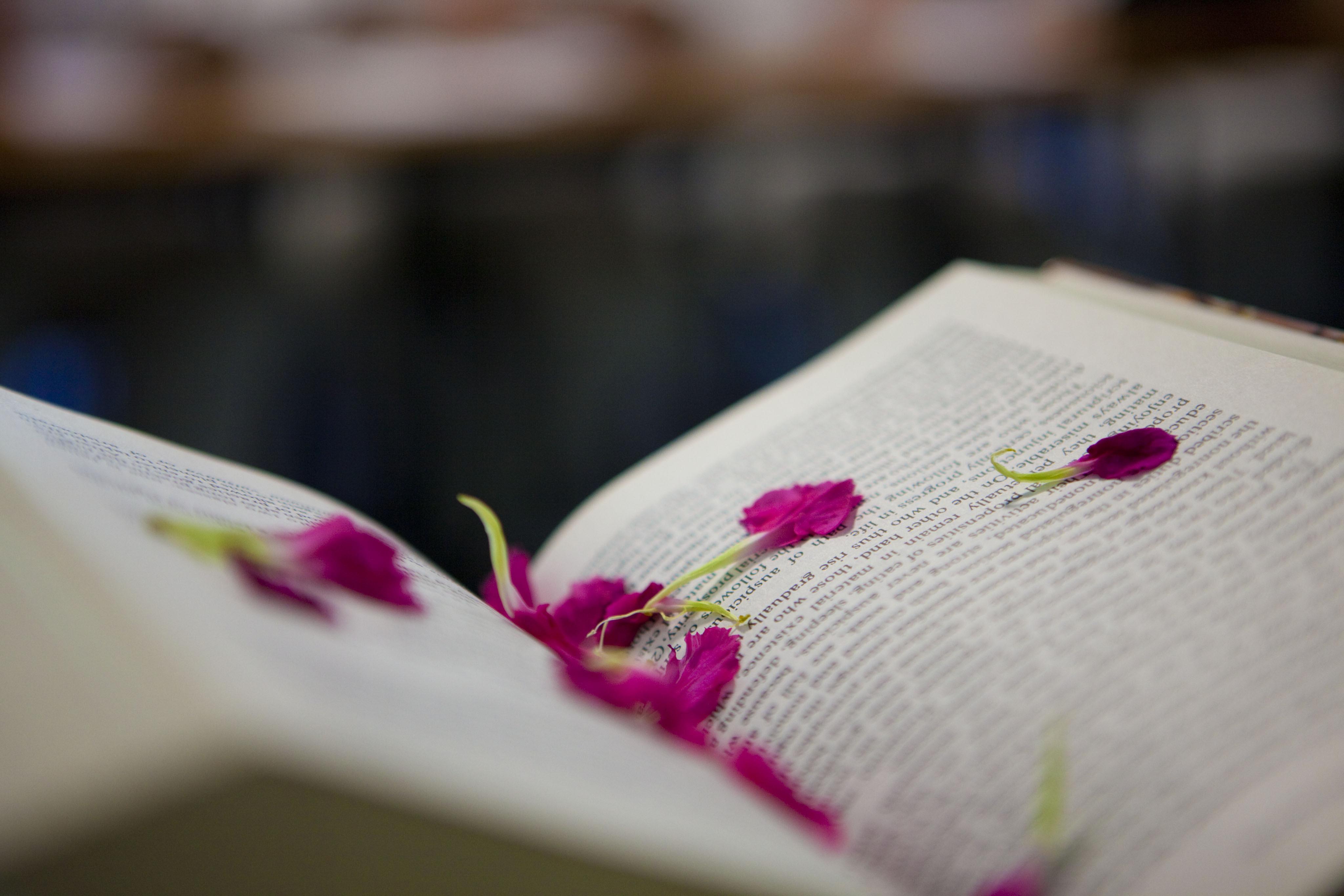 Книга жизни обои на рабочий стол