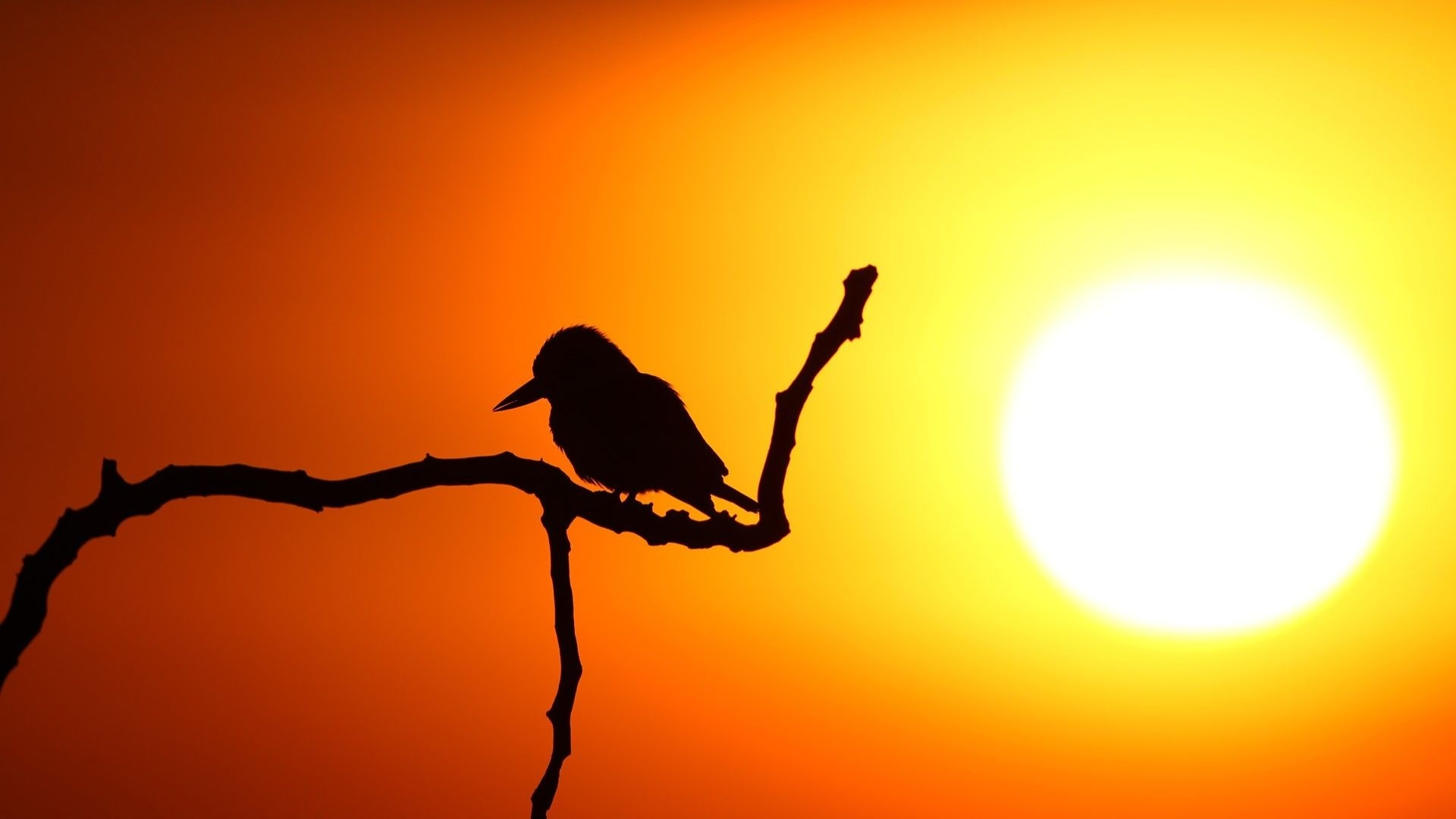 a sunrise on the veld short In the short story a sunrise on the veld, doris lessing highlights a little boy who went on a hunt and discovered dying buck causing him to see that death can't be controlled or conquered by him.