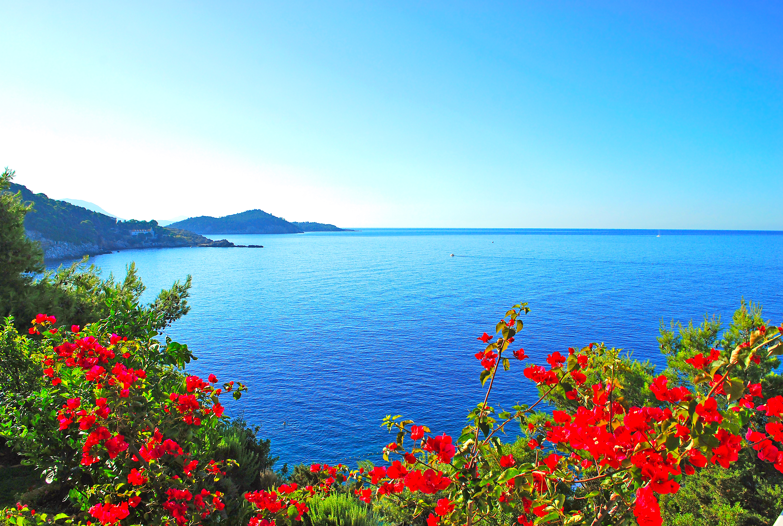 Море и цветы