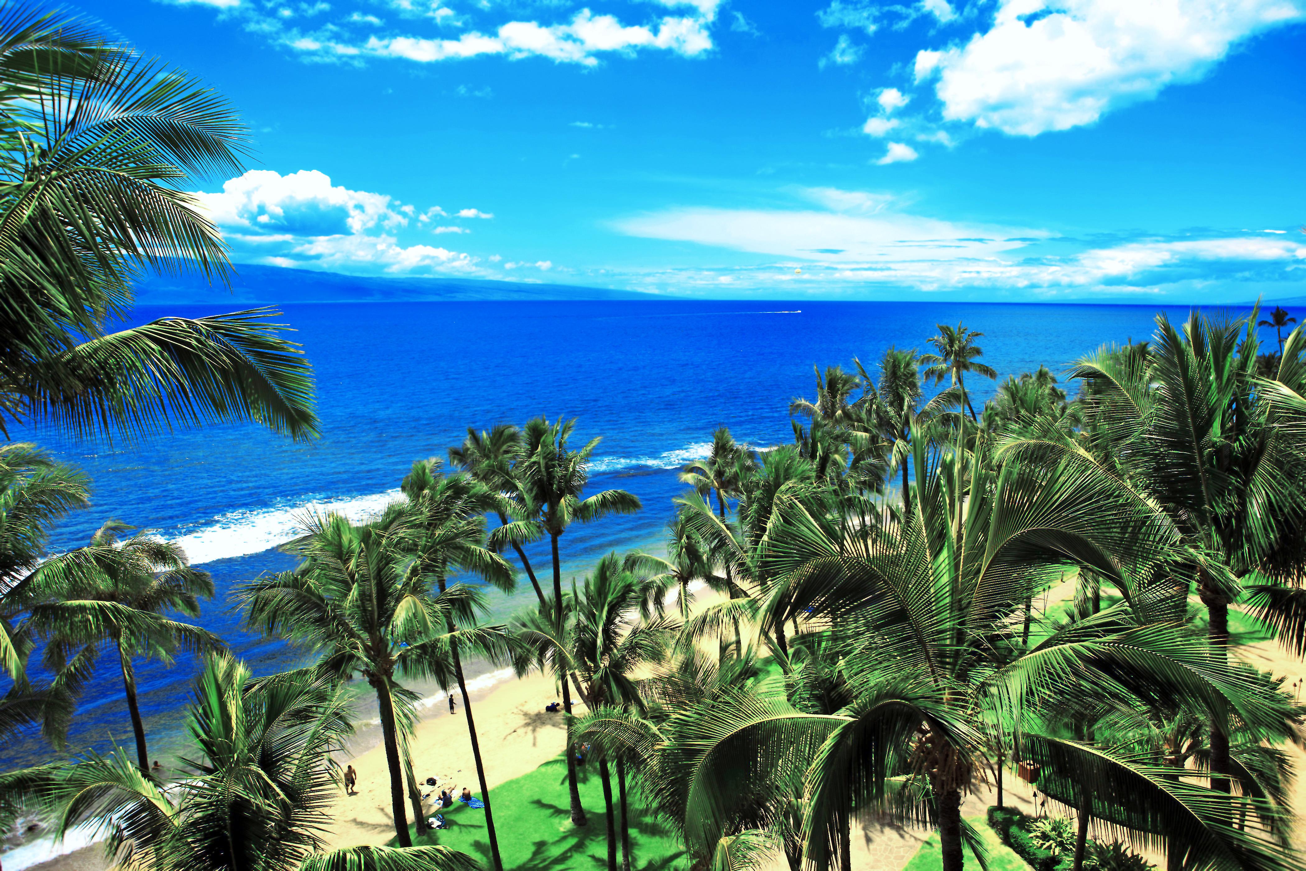сегодняшний день фото тропических берегов сети появились фото