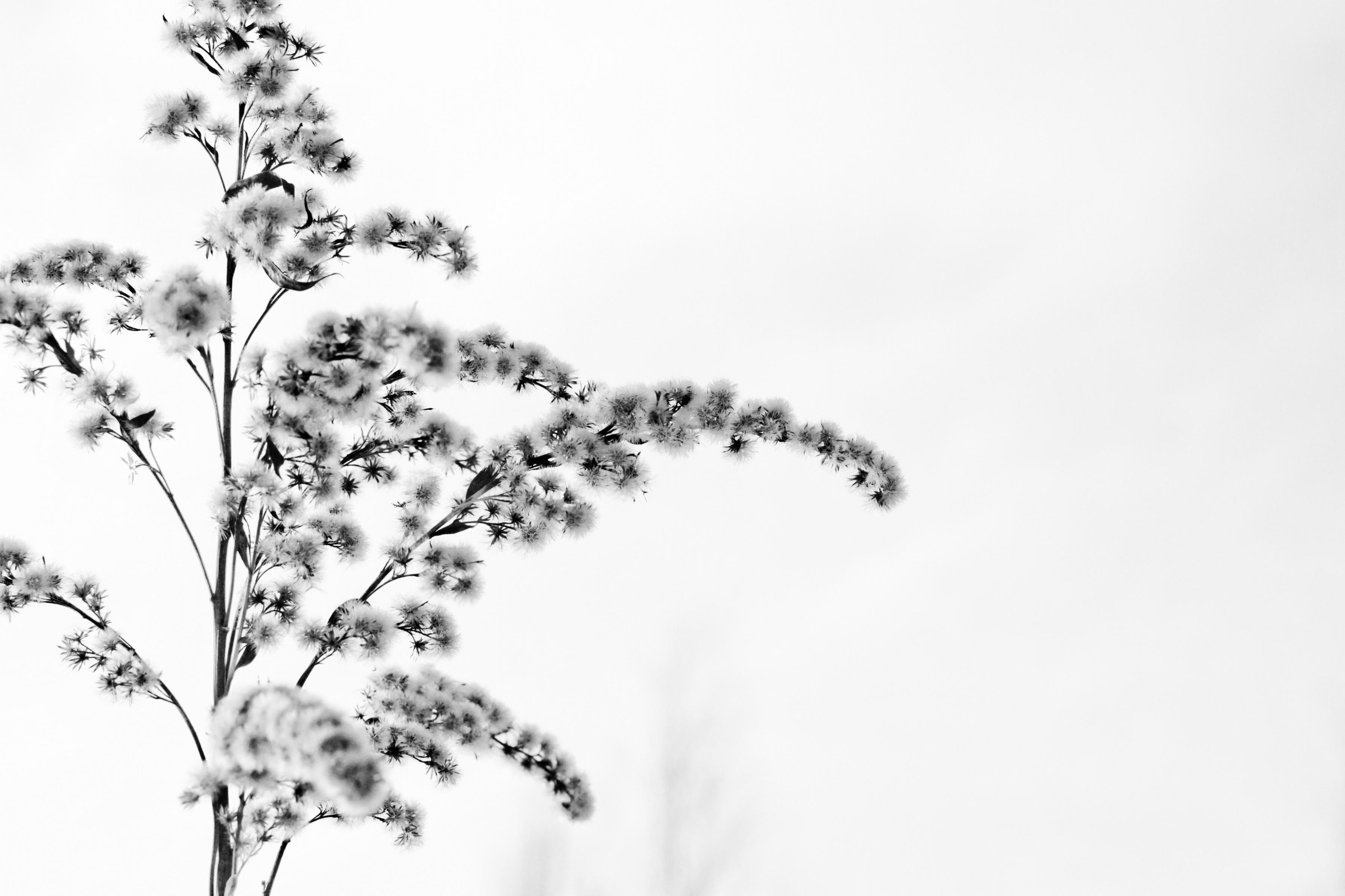 живописные картинки белый фон всё