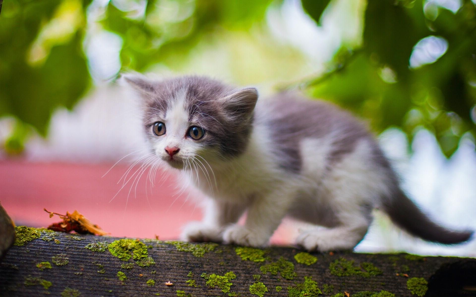 других фотографии котят в очень высоком разрешении идёт полноценной философии