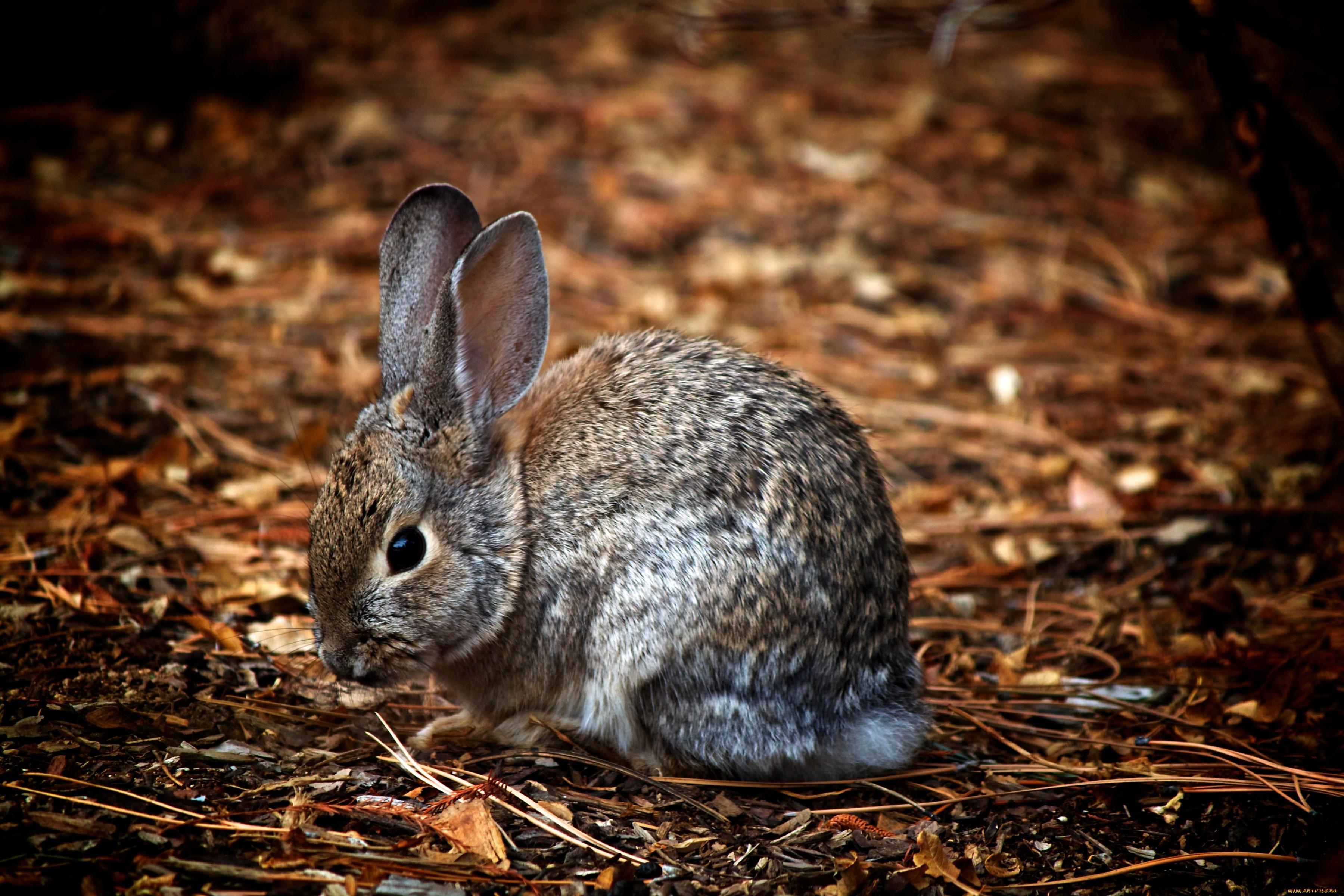 картинка зайца самая лучшая нас разработана