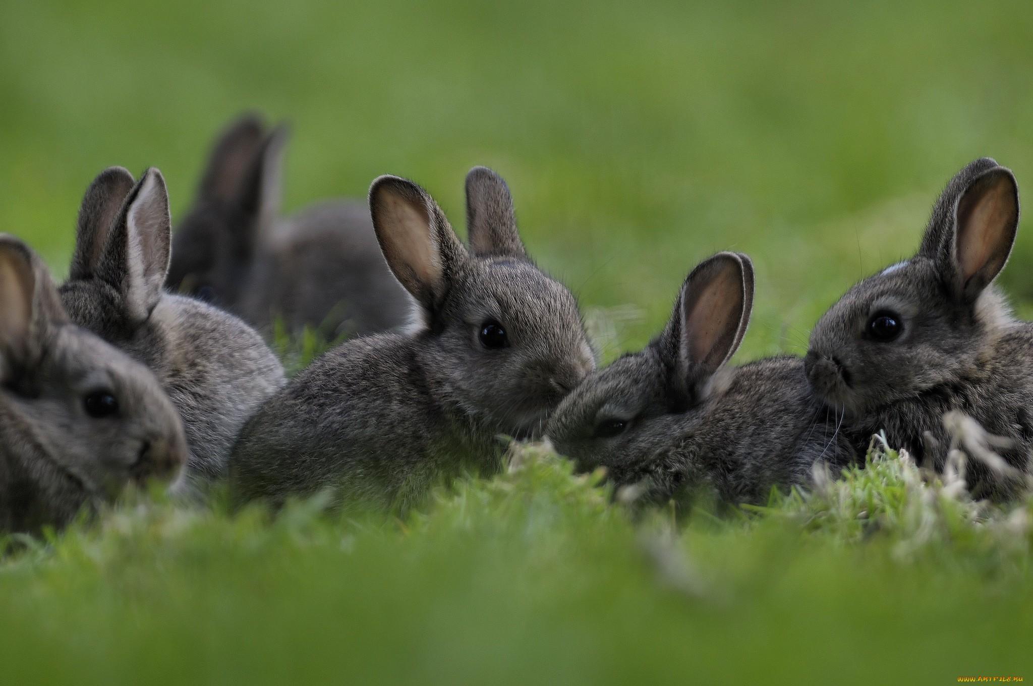 Картинка кролики в лесу