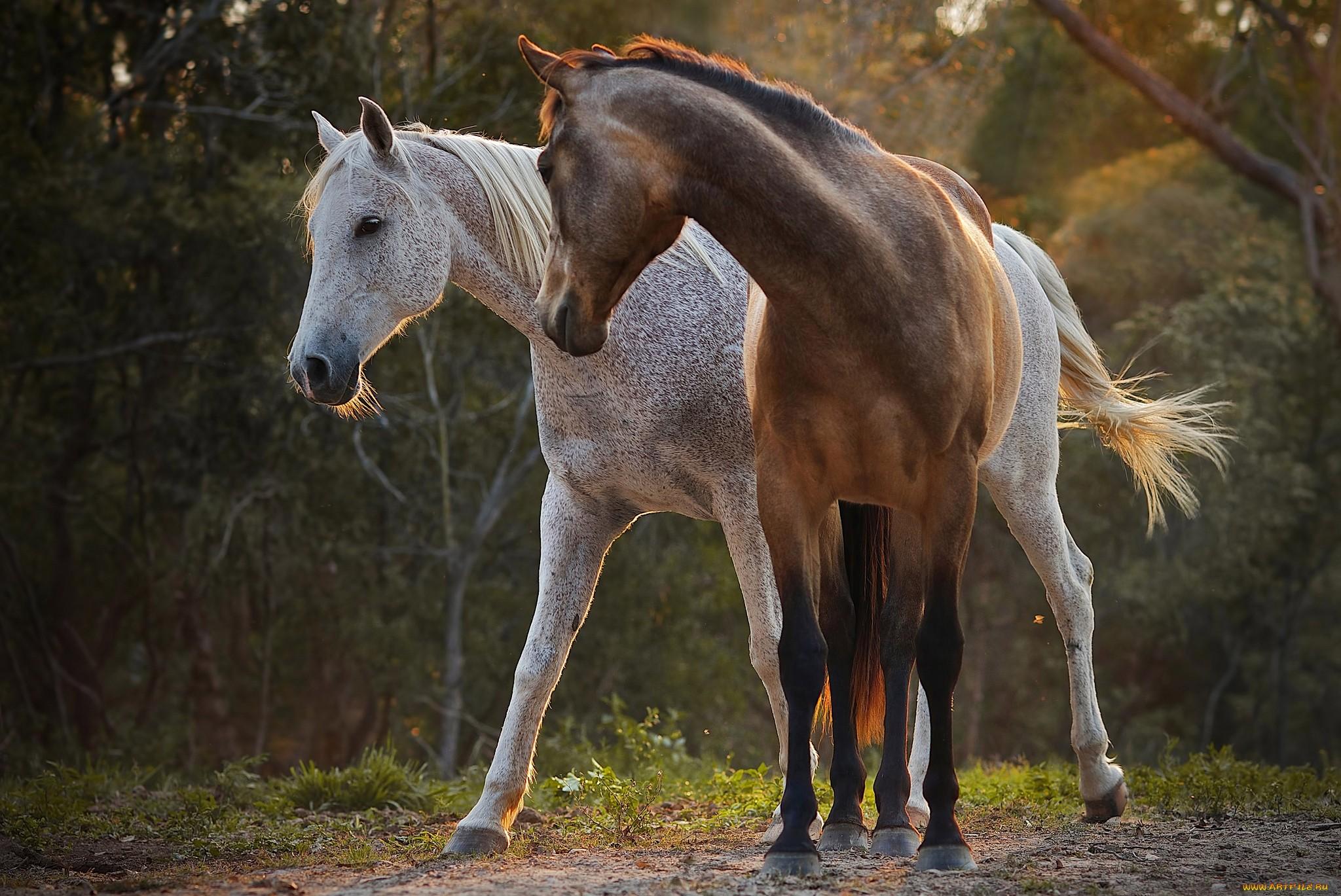 лошадь картинки большого разрешения фото вышло дорисованной
