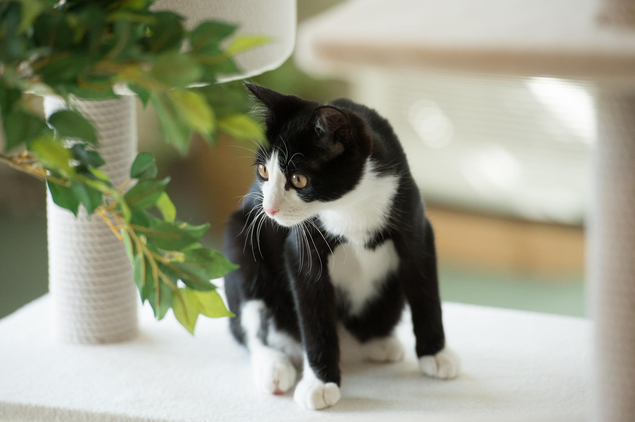 сейчас черный и белый котята на столе картинка уходе рынка корейцы
