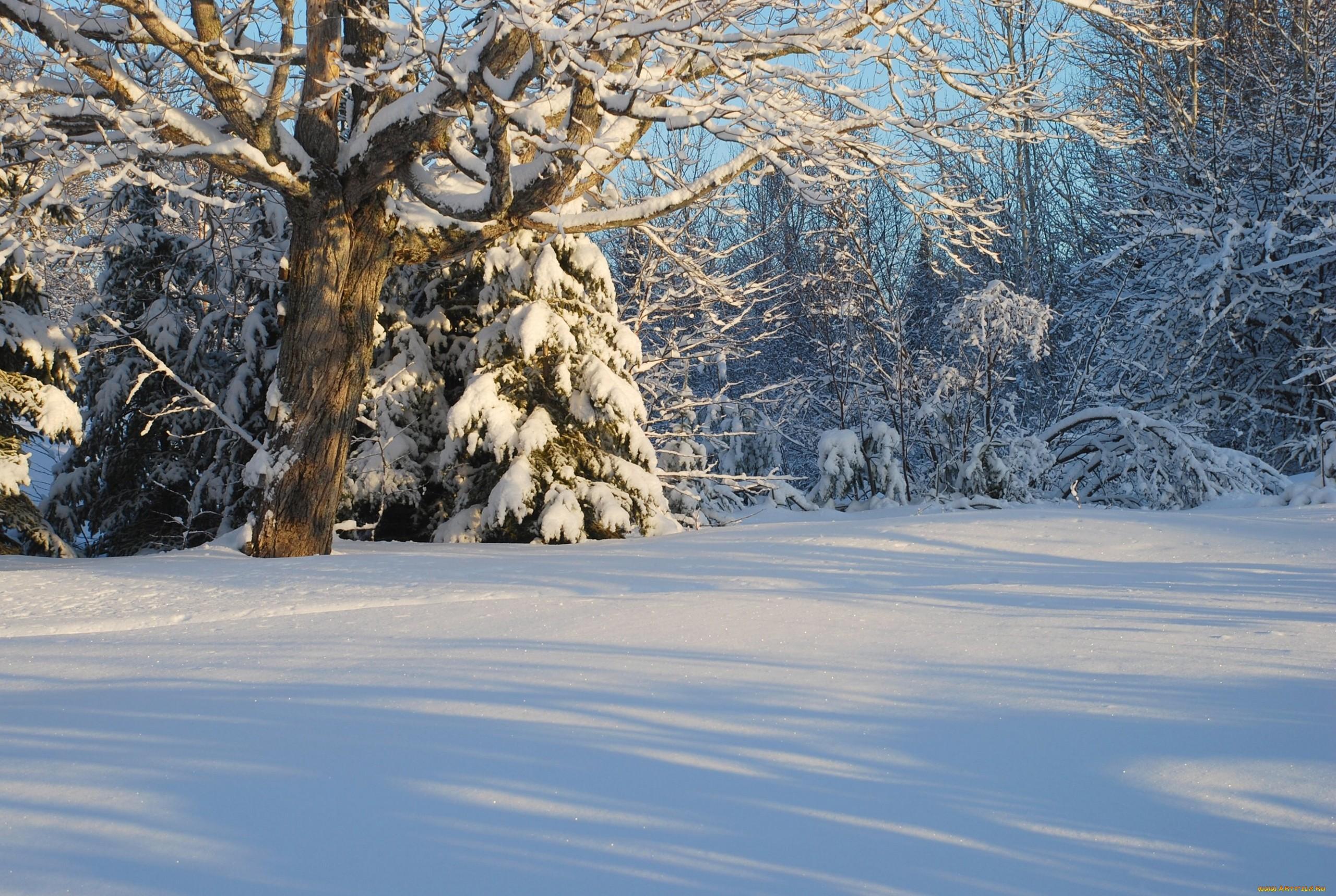 родилось картинка зимней лесной поляны окон